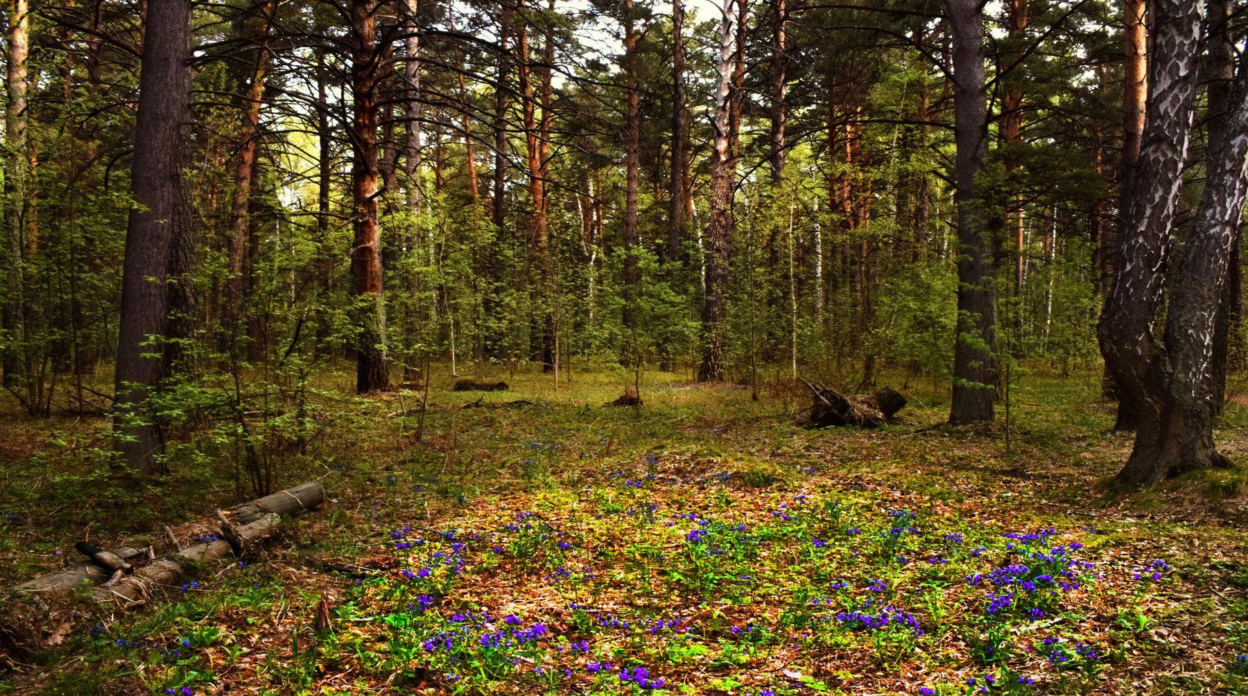 Майский лес. весна лесной пейзаж