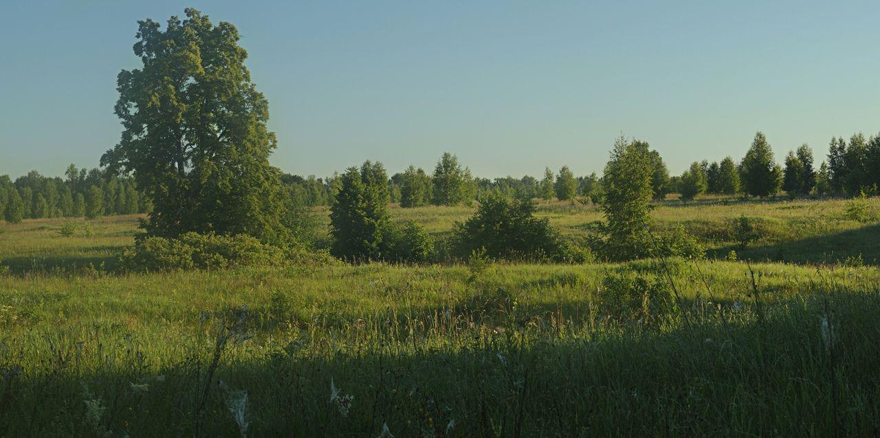 Утро в поле Рязанская область село Рождество-Лесное июнь лето раннее утро восходящее солнце трава деревья
