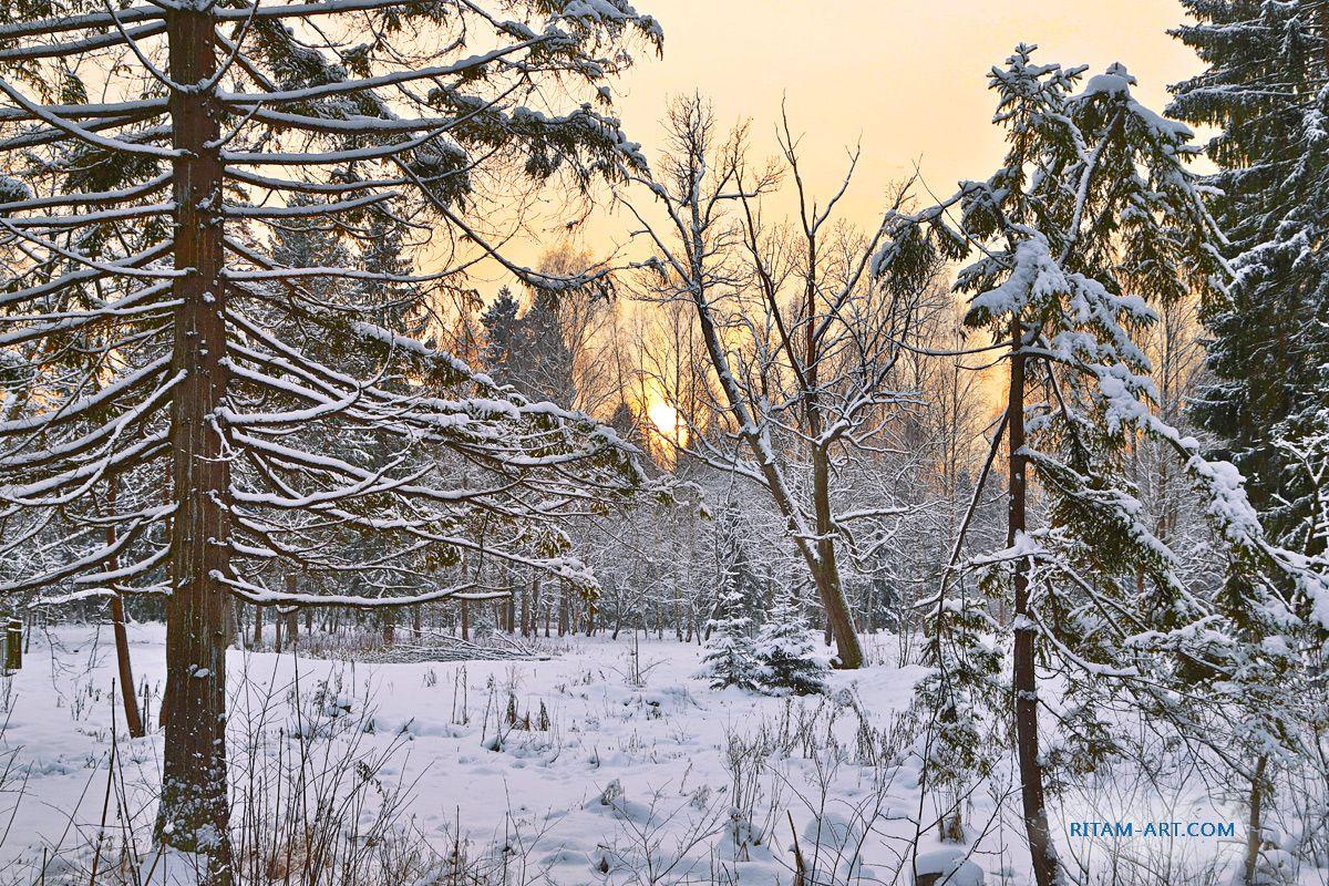 Зимняя сказка / Winter Fairytale зима зимний лес парк снег деревья хвоя ели ветви закат рассвет восход утро вечер холод мороз солнце небо гатчина санкт-петербург сугроб ритам стихи поэзия сказка новый год рождество winter forest park snow sunset sunrise dawn tree fir firry fairytale