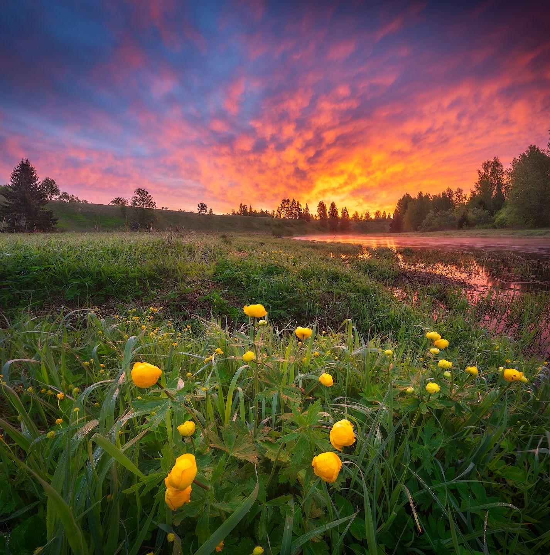 *** река рассвет весна цветы
