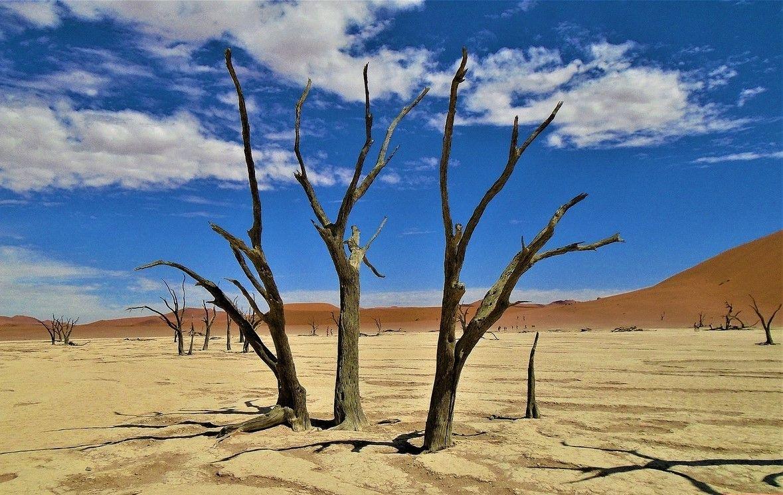 Пустыня Намиб, юго-запад Африки. африка намибия