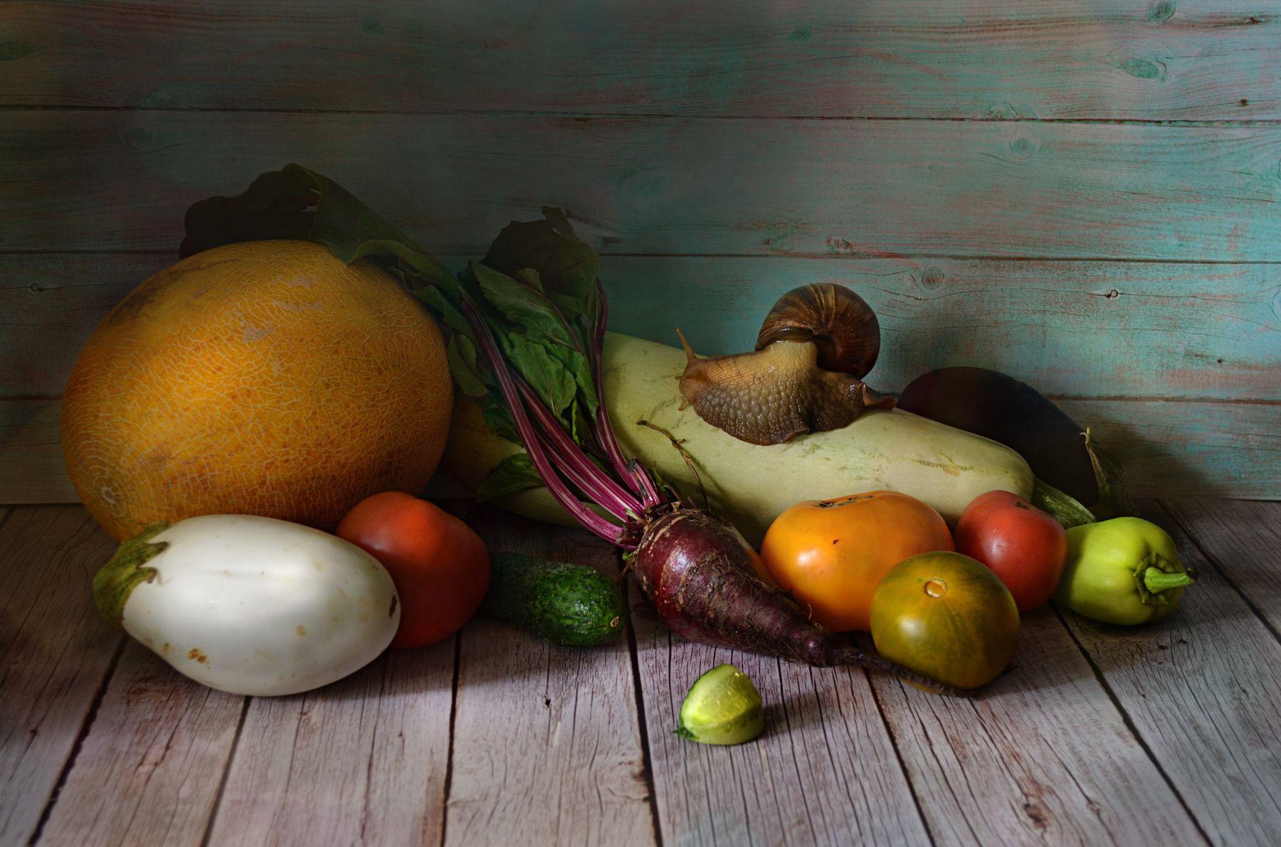 Щедрый урожай натюрморт овощи томат огурец перец баклажан свекла дыня стол улитка Ахатина