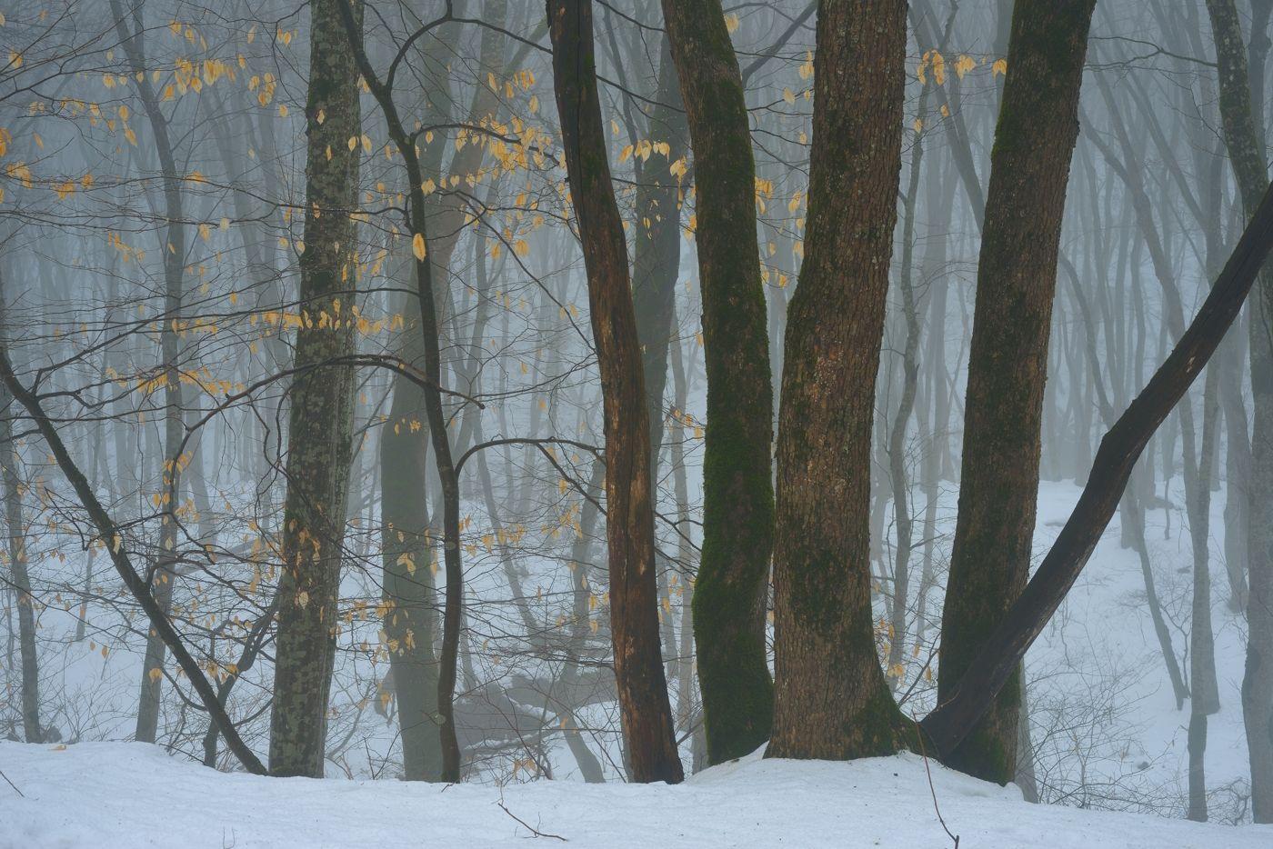 Зимний лес зима лес снег дерево туман листва