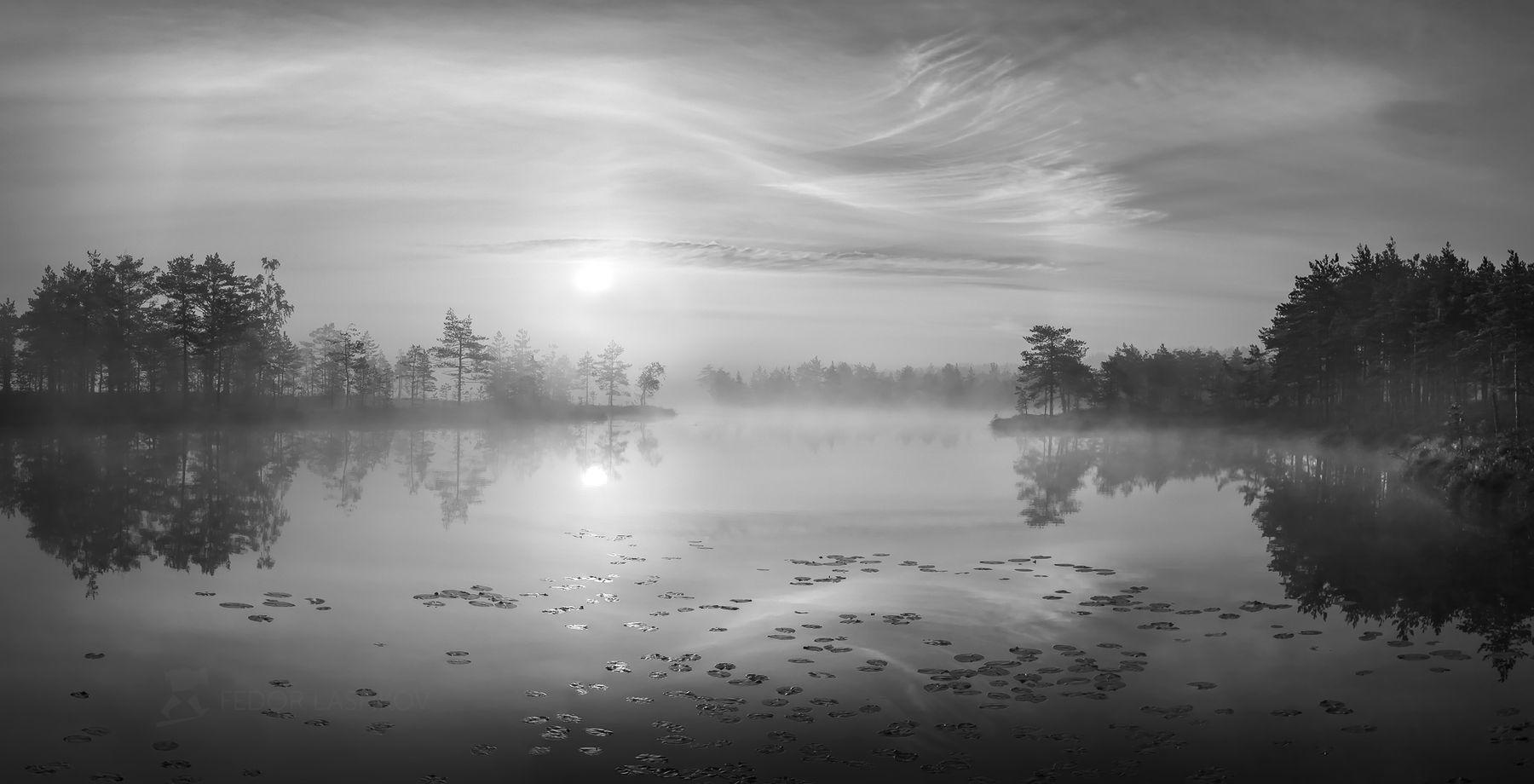 Музыка тени и света Ленинградская область рассвет лето сосны озеро отражение деревья берег небо облака болото водная гладь