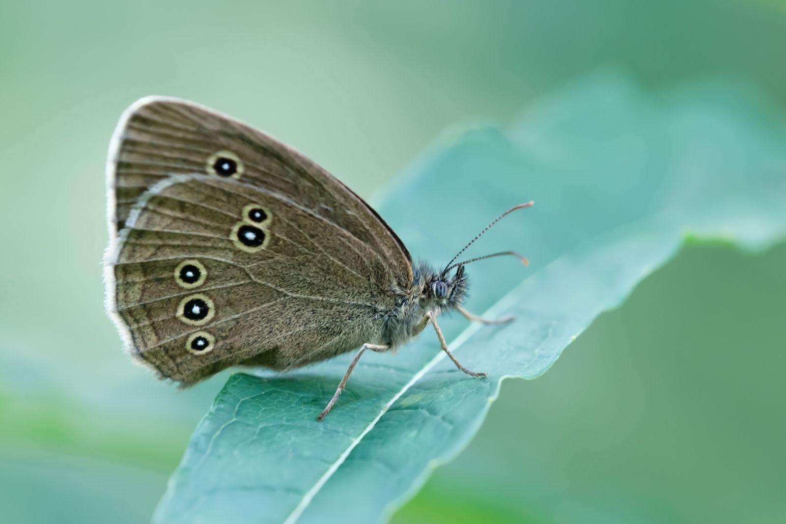 На отдахе. Макро бабочка фото бабочки