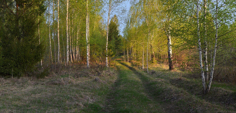 По дороге в весенний лес