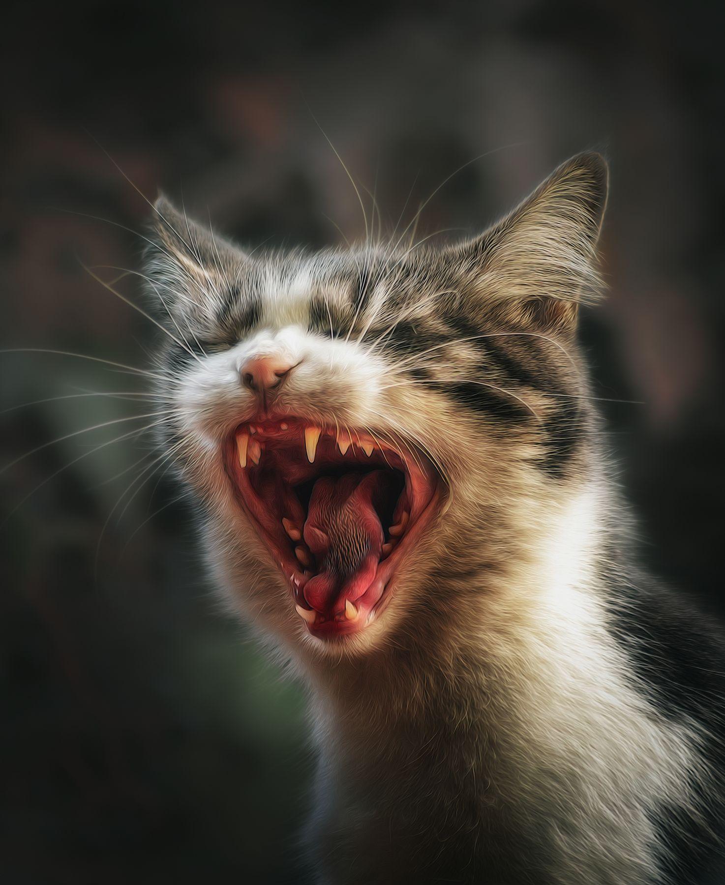 Пора на приём к стоматологу )) кошка осень портрет день животные фон боке