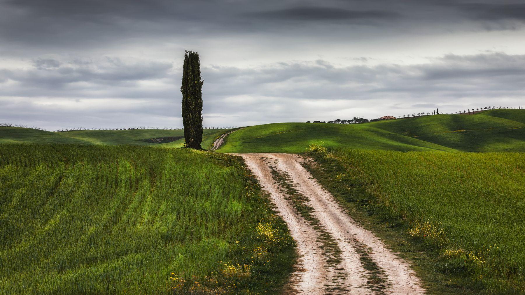 у дороги поле кипарис дорога