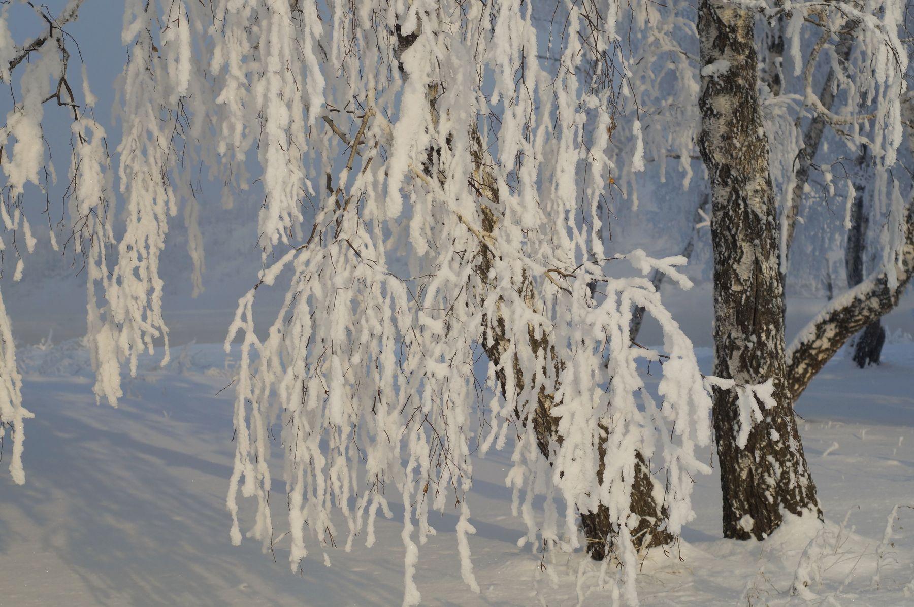 Зимние картинки зима снег иней деревья березы лес