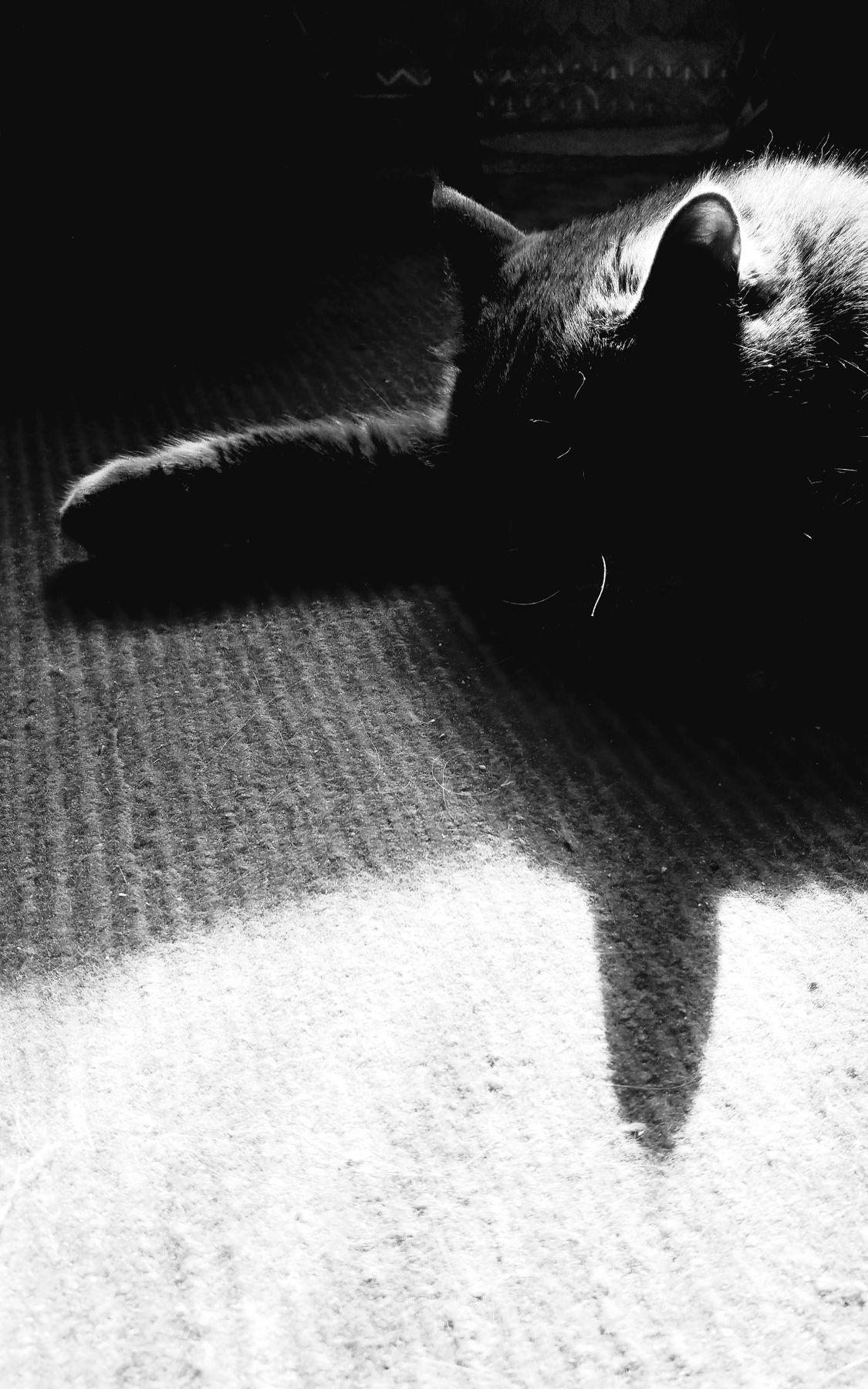 утренний этюд Утро кошка счастье