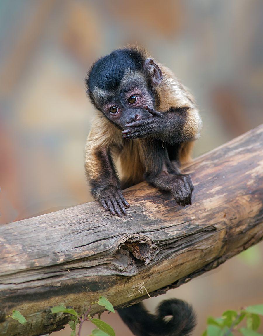 *** обезьяна