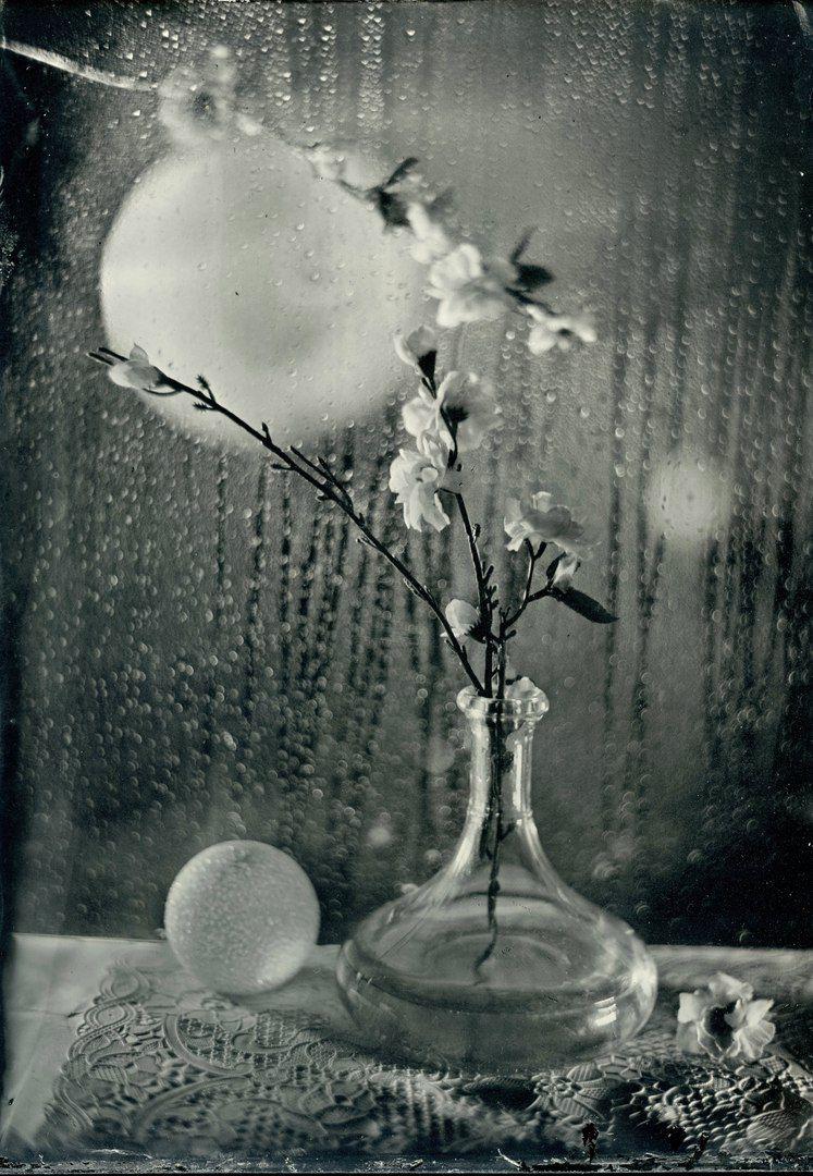 Сакура в лунном сиянии