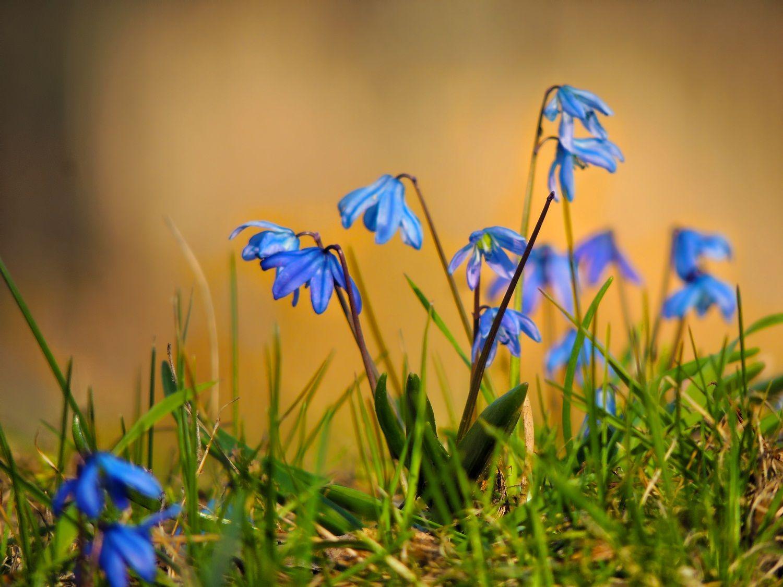 *** природа флора цветы