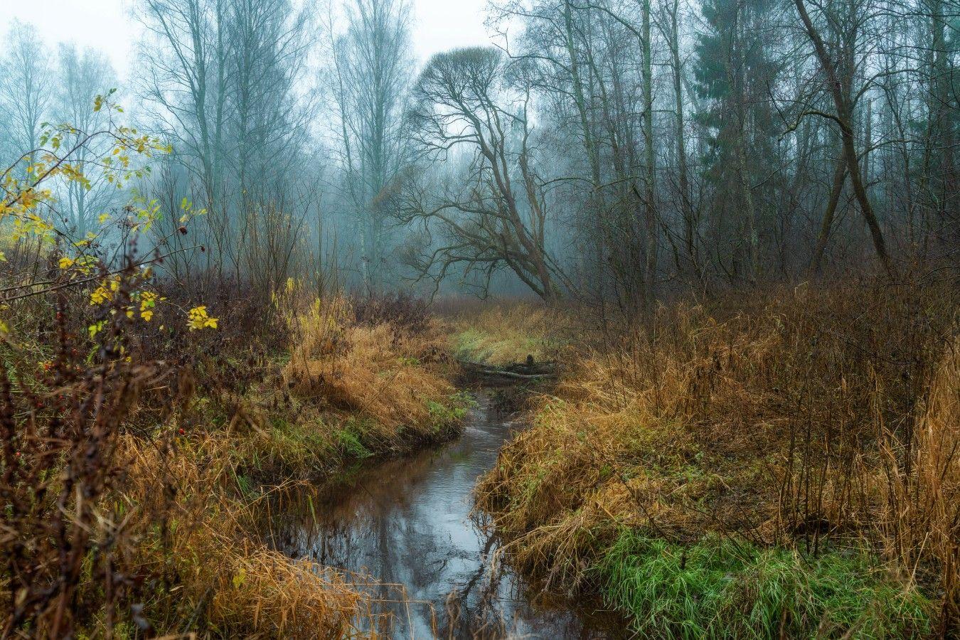 Осенним утром... петербург осень невский лесопарк туман утро