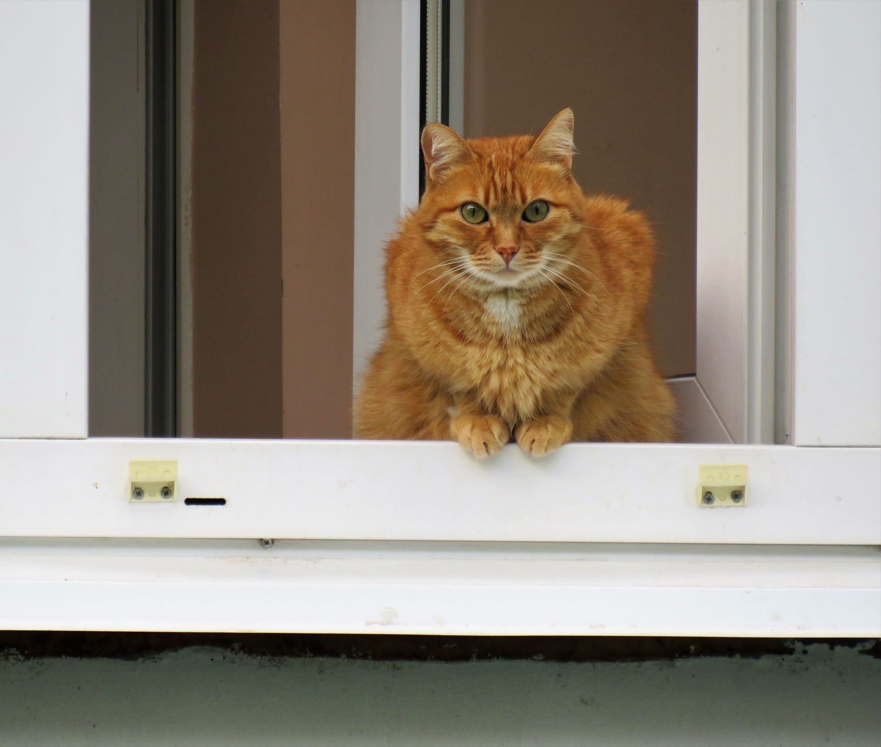Рыжий кот кот животные кошка