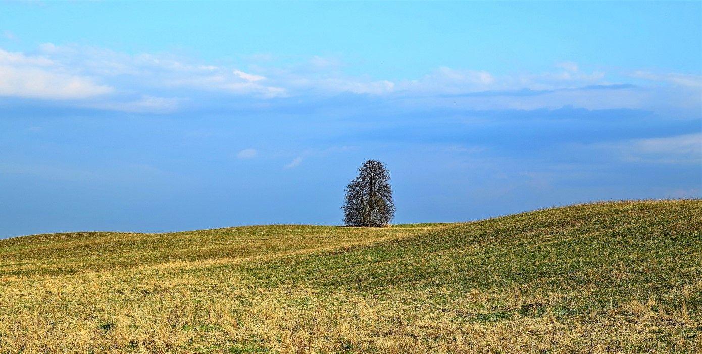 Одинокий 2 Весна