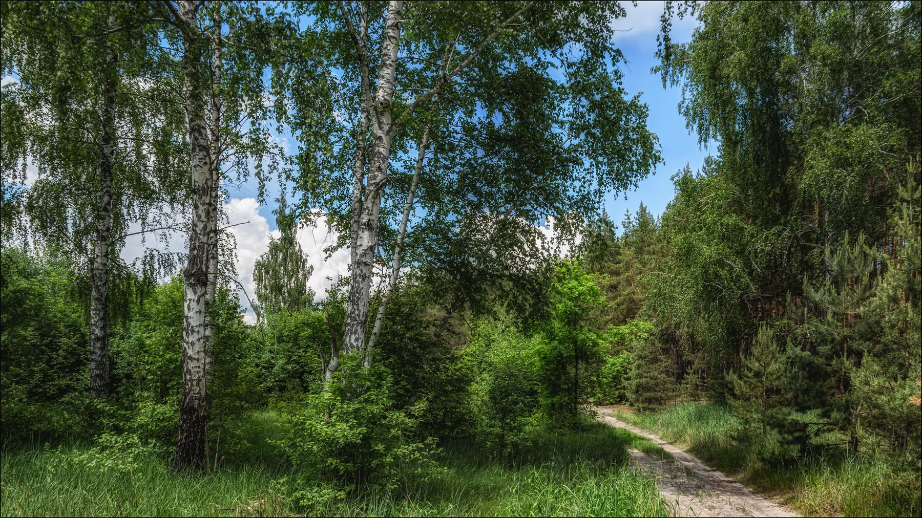 Летний полдень. лето пейзаж лес