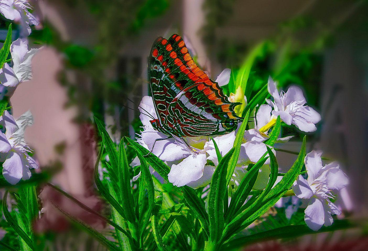 ***Бабочка на цветке.