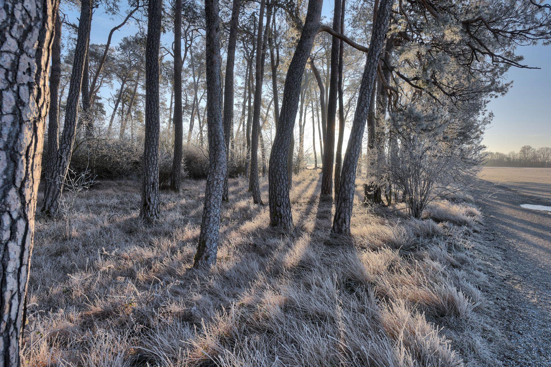 Выглядывая из-за дерева утро лес солнце туман