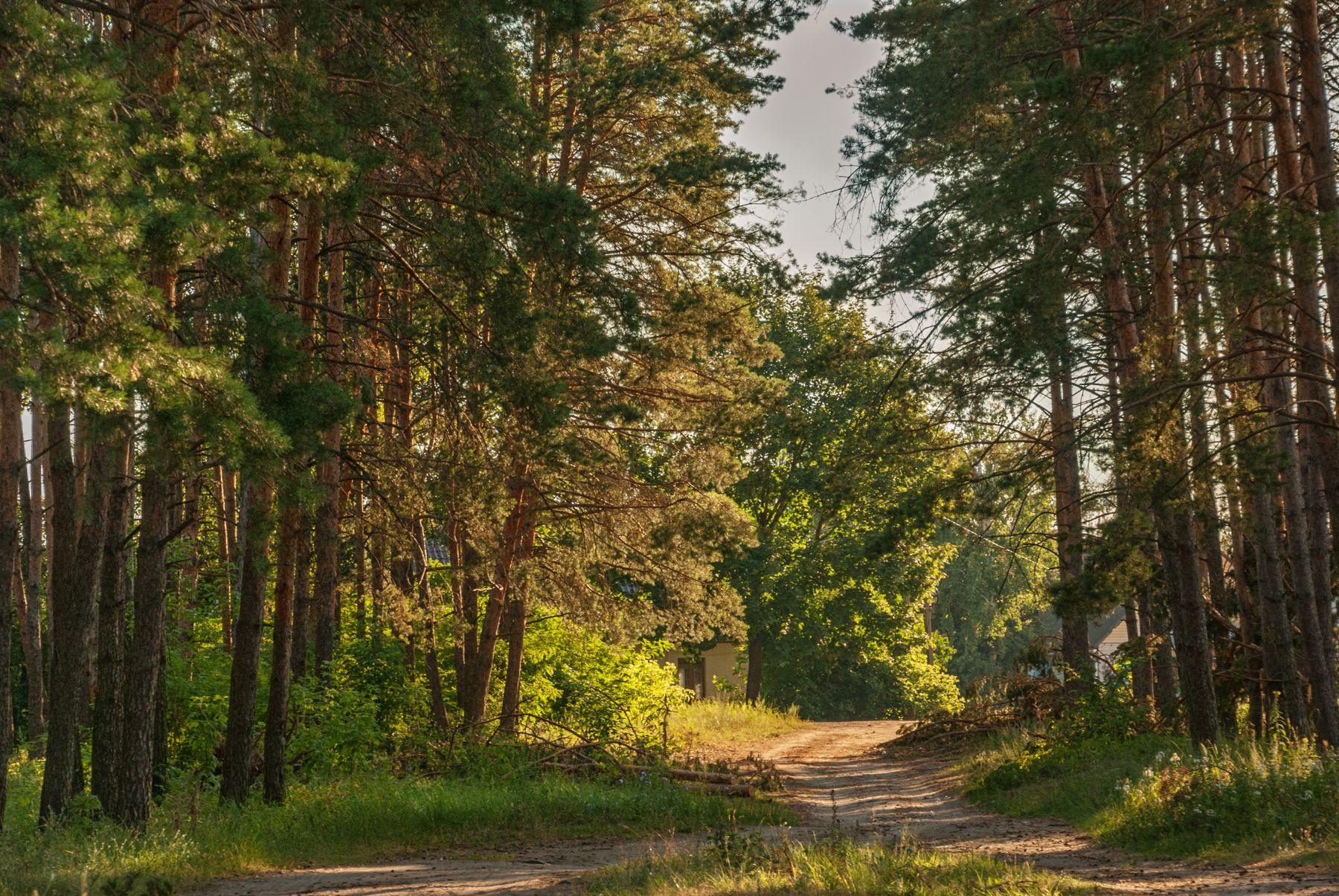 Утро дорога сосновый бор окраина города утро