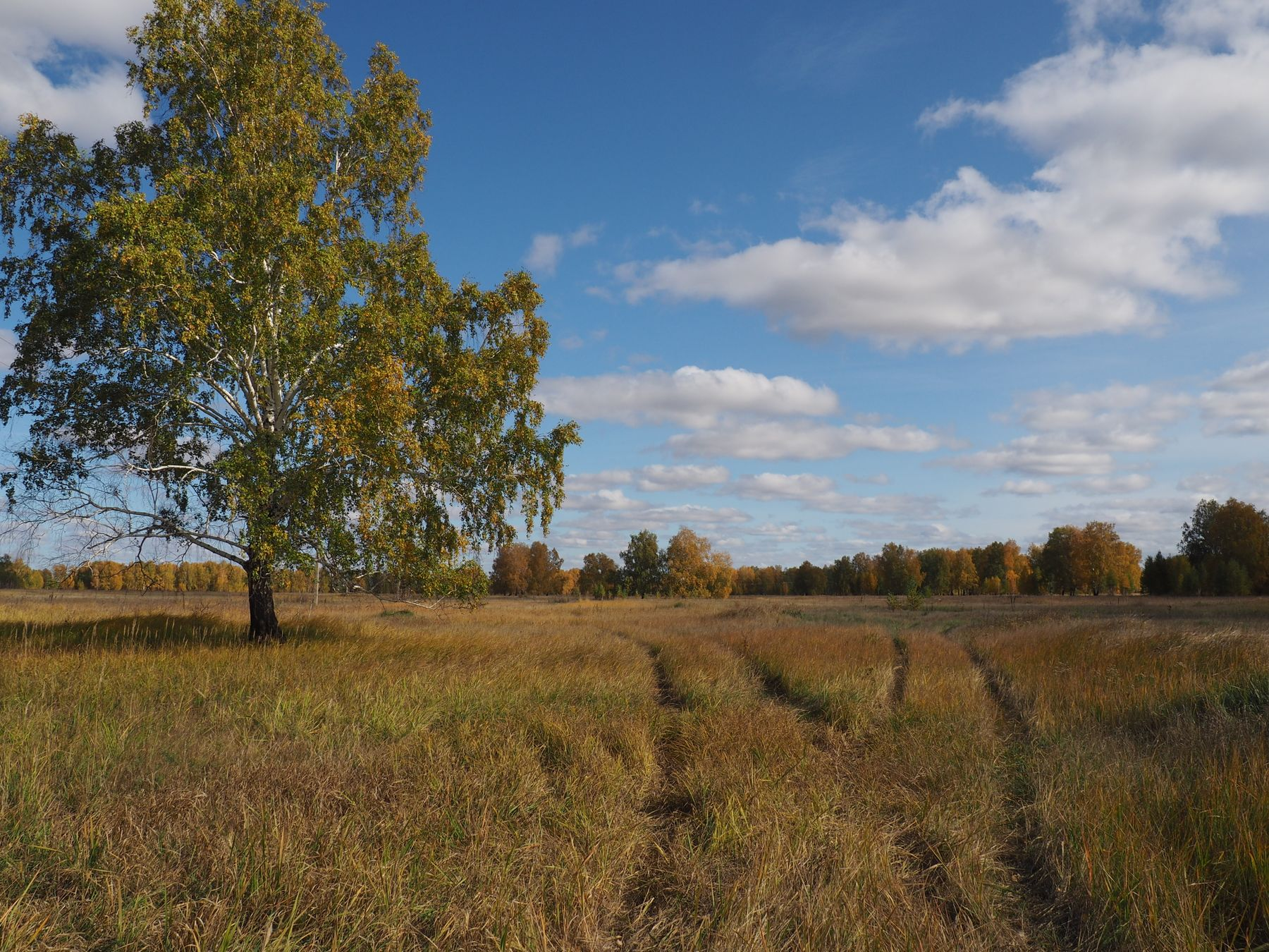 русское поле поле лес небо