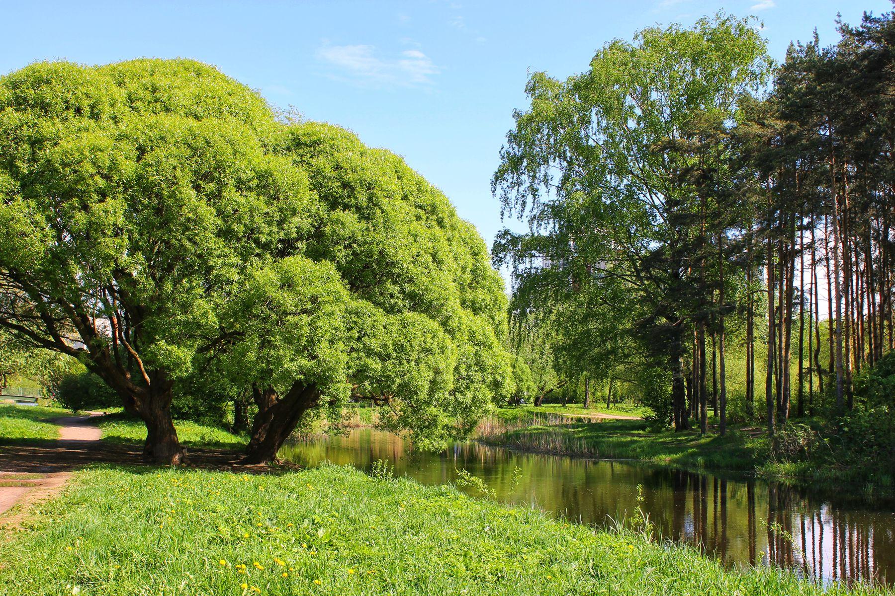 "Парк ""Александрино"" парк природа весна пруд пейзаж"