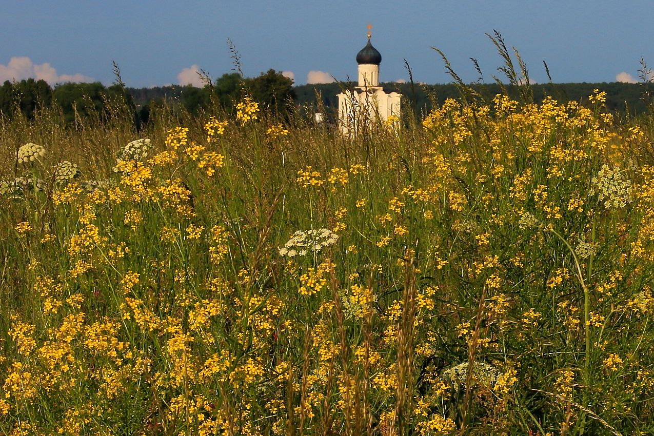Полюшко-поле - Русское поле !!! пейзаж Боголюбово храм Покрова на Нерли церковь поле цветы Россия Русь