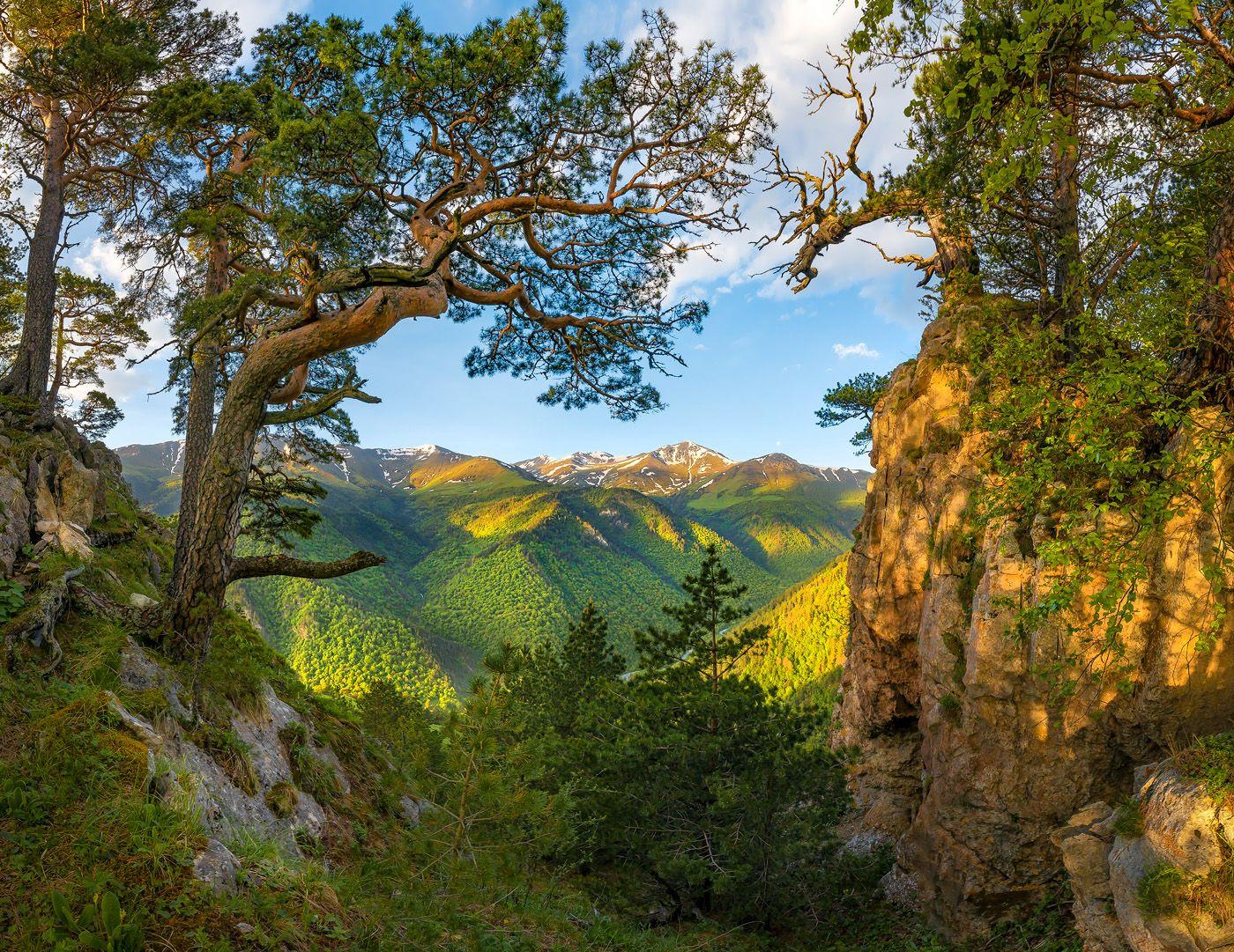 Обрамление Северный Кавказ Горы гора Архыз хребет горное сосна сосны лес деревья лесное дерево ствол путешествие скалы