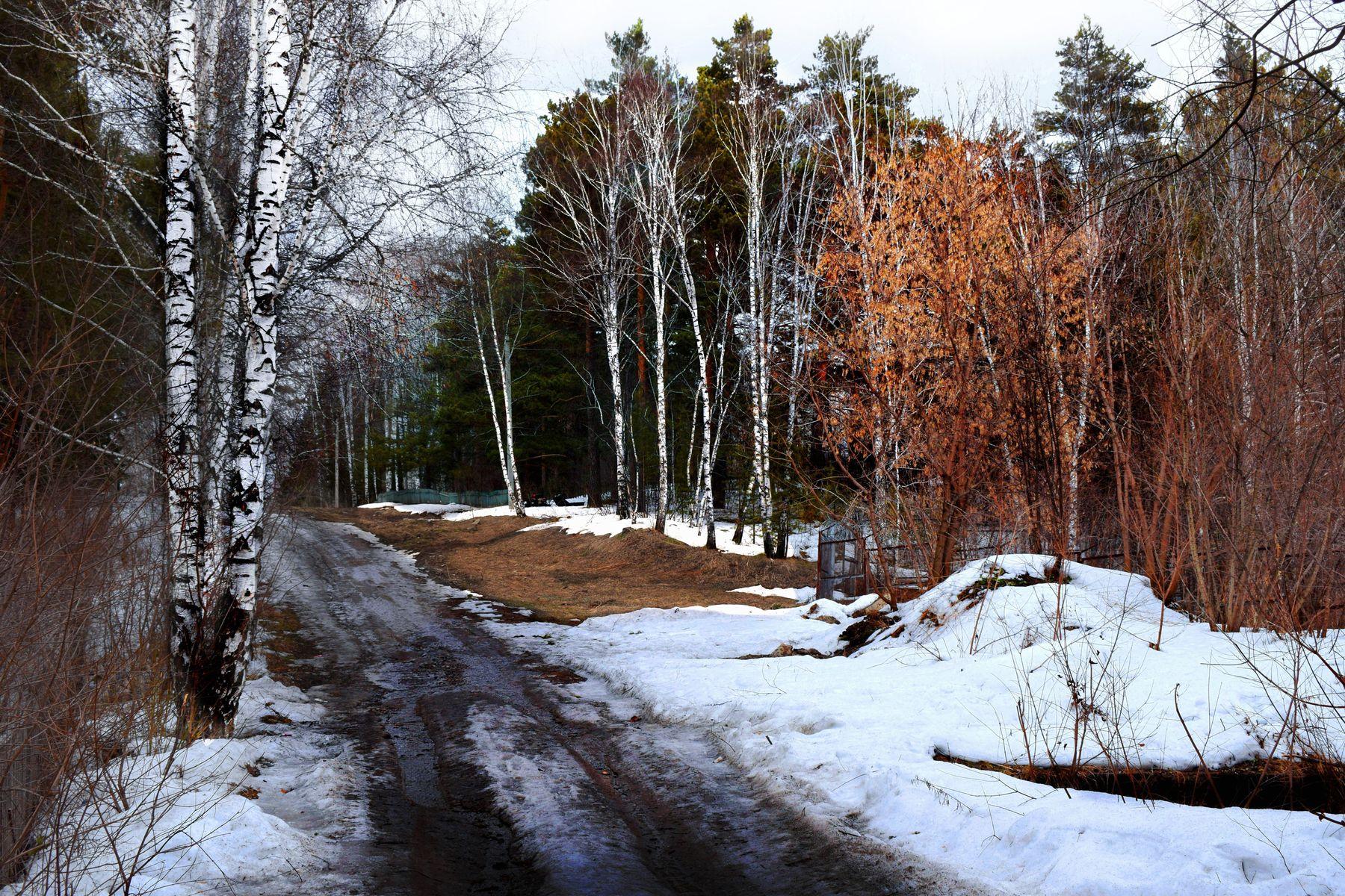 Апрель. Лесная дорога. весна лесной пейзаж