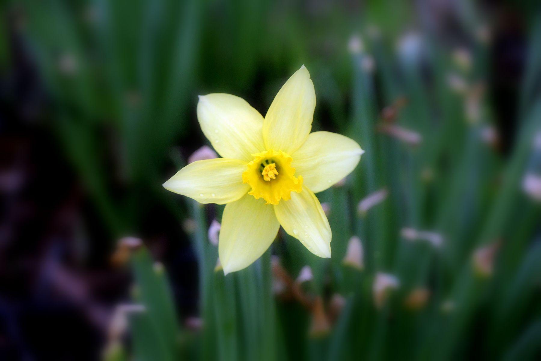 Первоцвет. Весна Растения