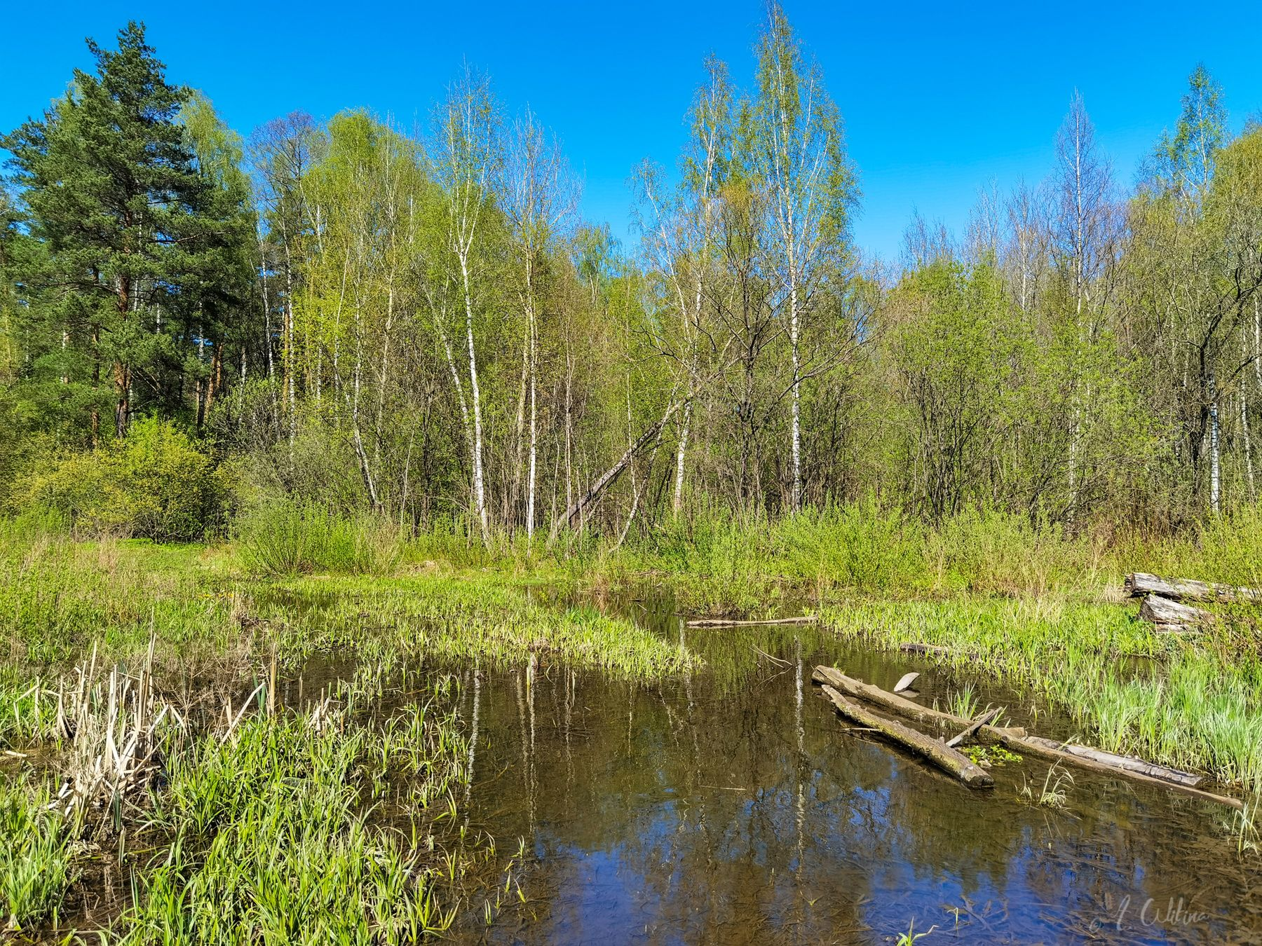 Майские топи лес поле весна май половодье ручей тропинка зелень деревья