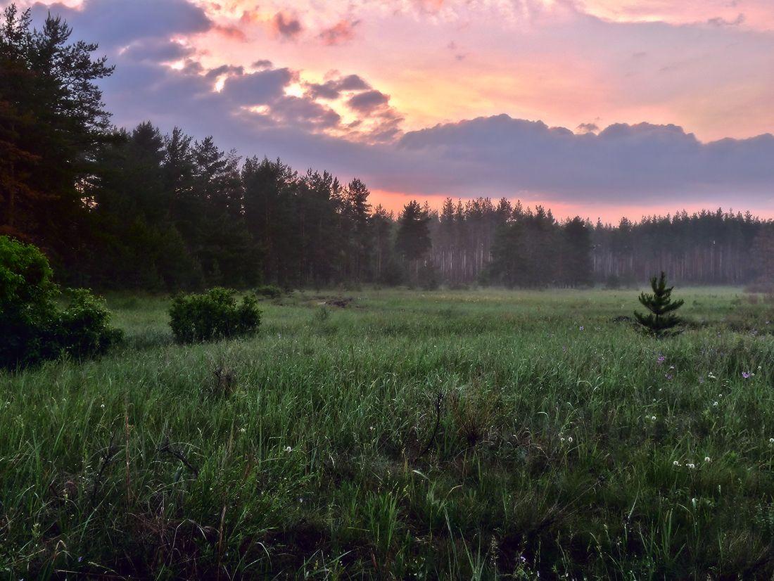 Летний вечер Луг лето вечер
