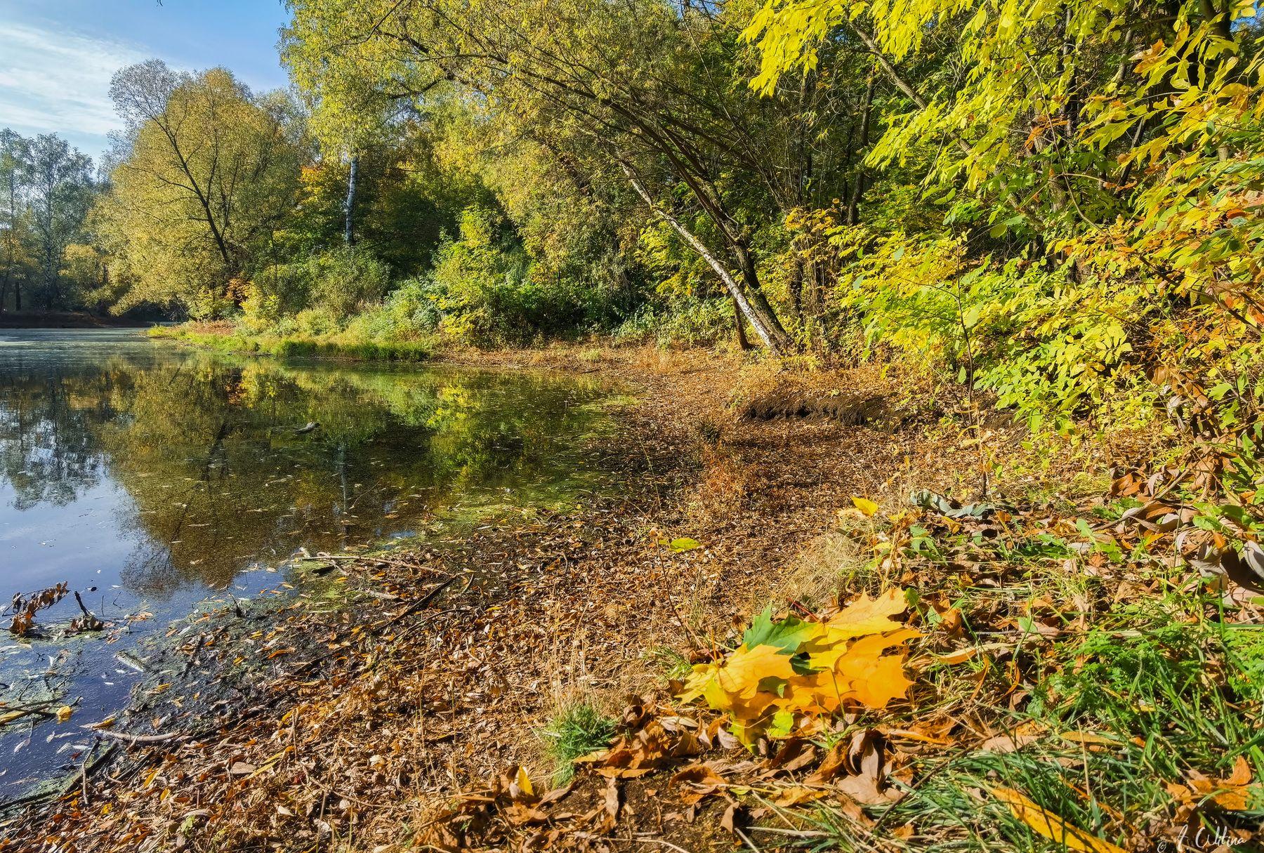 *** пруд осень листья парк лес березы сосны ясень клен