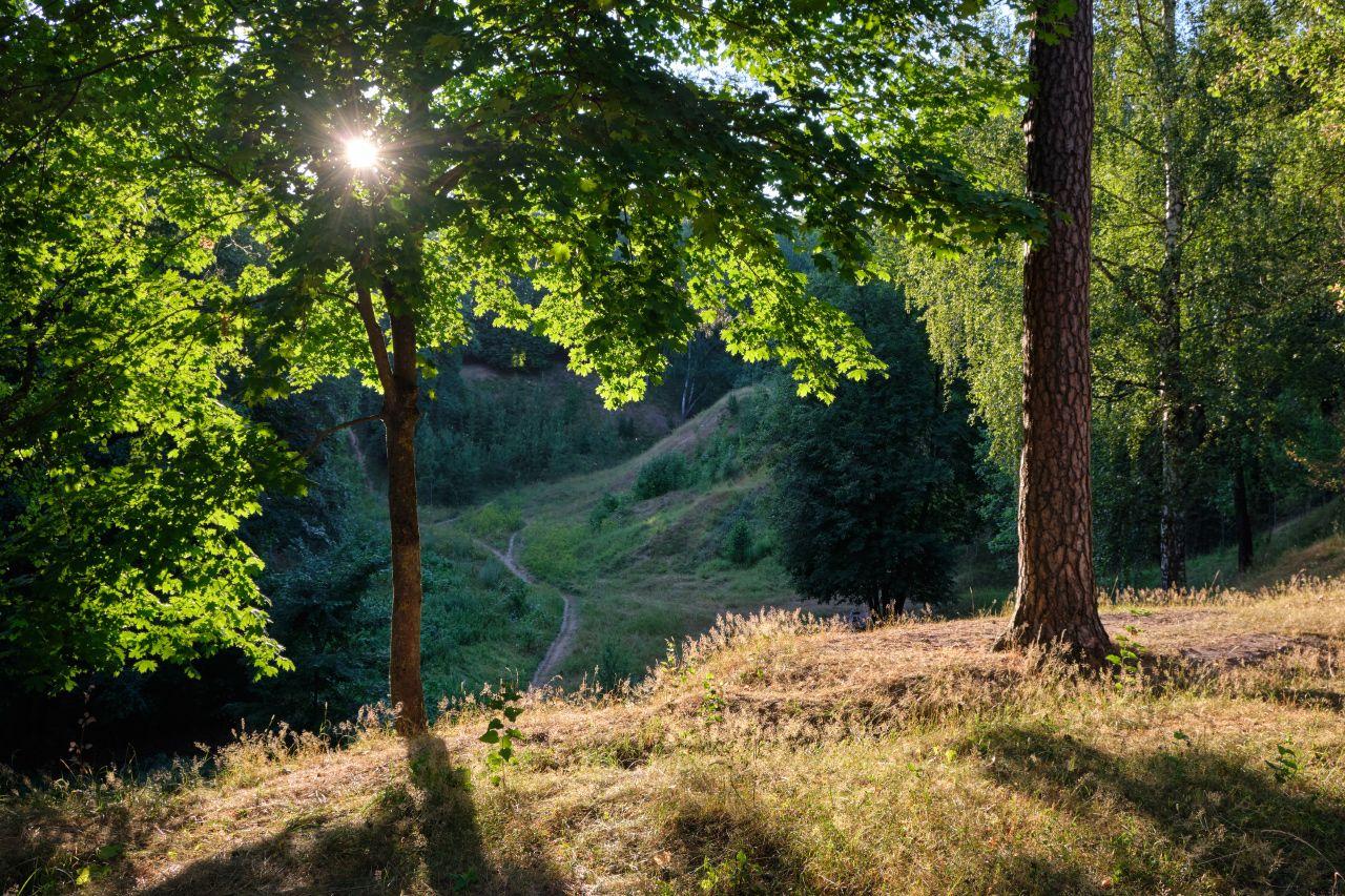 Свет и тень 2 лето солнце деревья ветви листья трава тропинка
