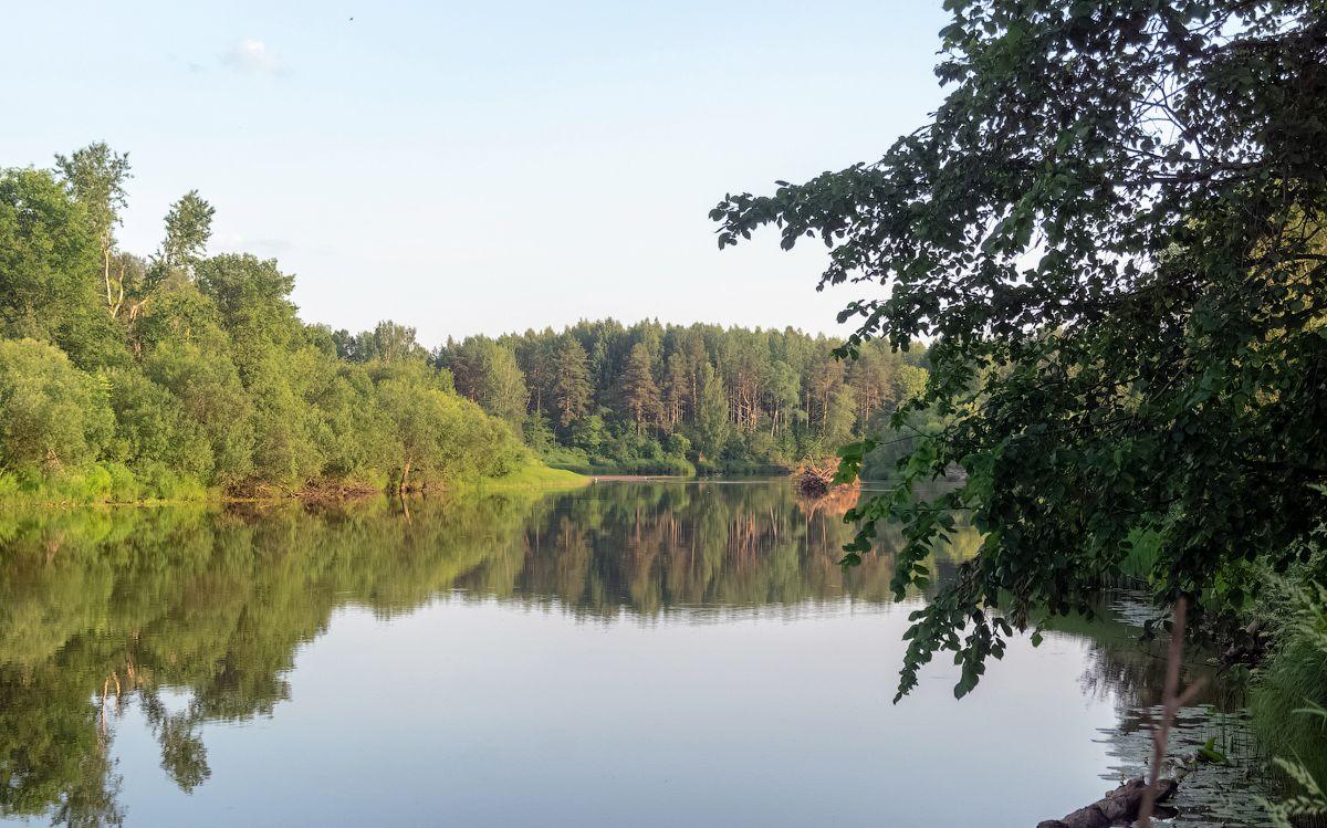 река Нея нея река лето природа пейзаж вид вода кострома отдых путешествие