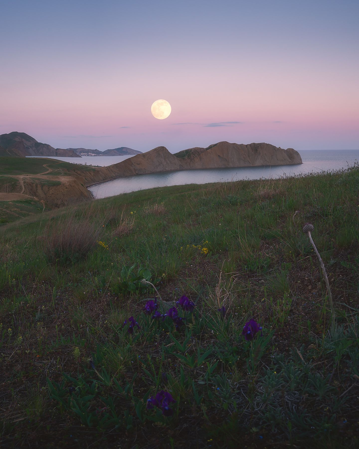 Ирисы и полная Луна