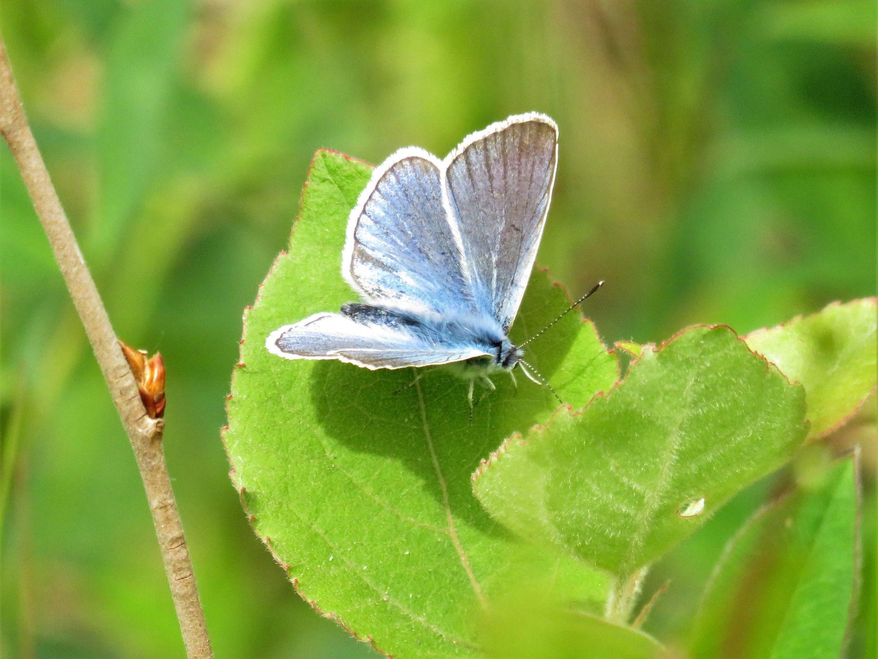 Мотылек насекомые бабочка лето
