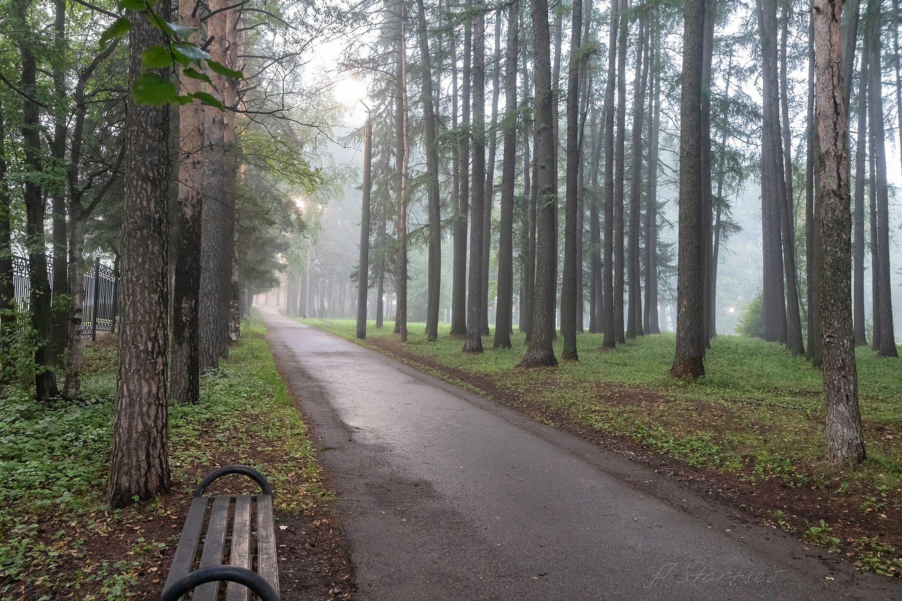 Туманное утро в парке утро Урал туман природа Пермский_край пейзаж парк Лысьва