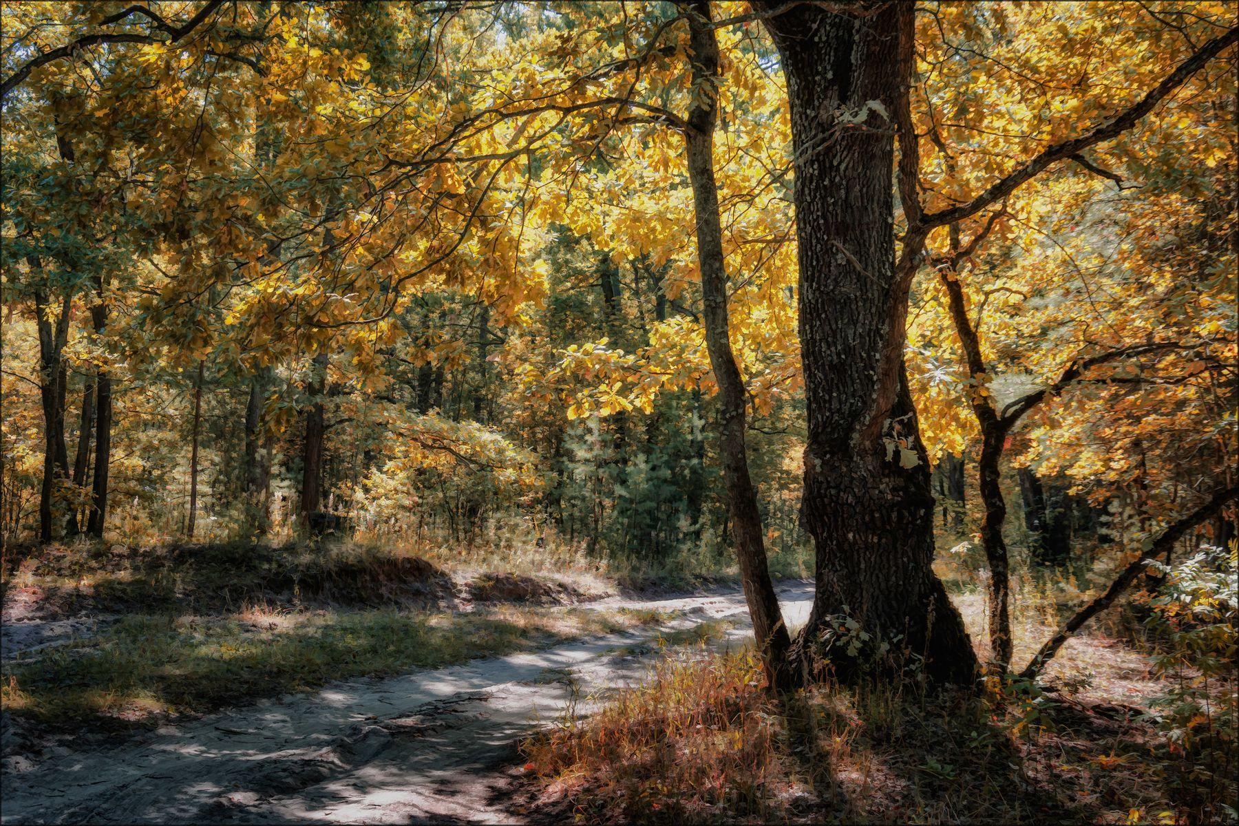 Бабье лето. пейзаж лес