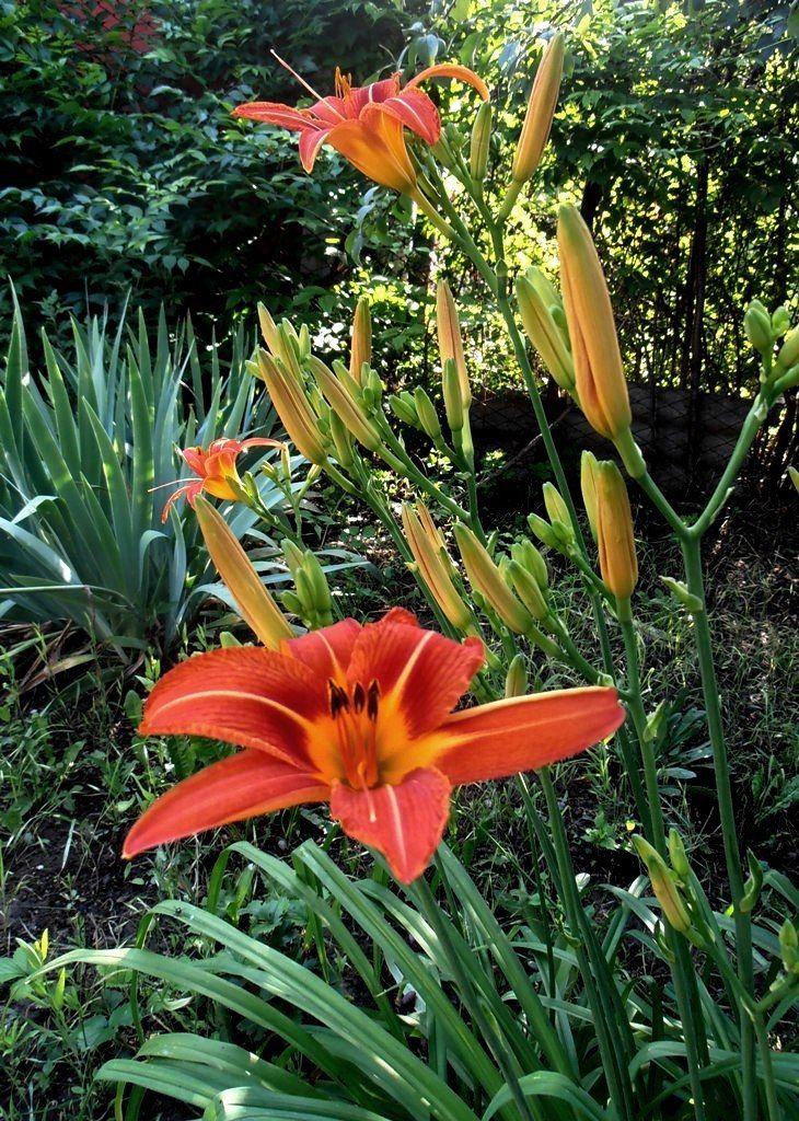 В саду дома цветы лето