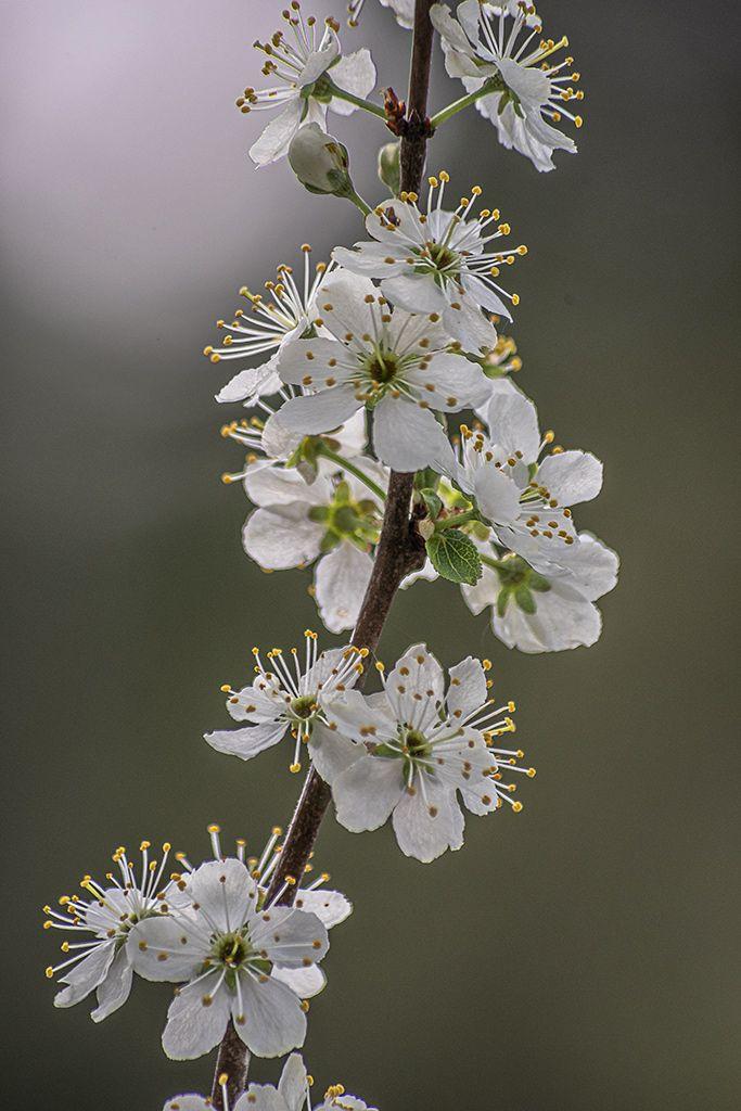 Зацветают сады Весна цветы сад