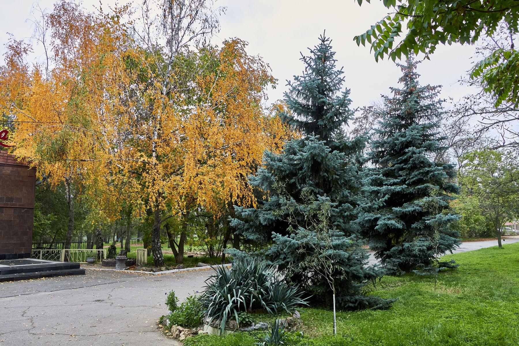 Осенний парк в Херсоне осень парк природа листья херсон ель берёза аллея