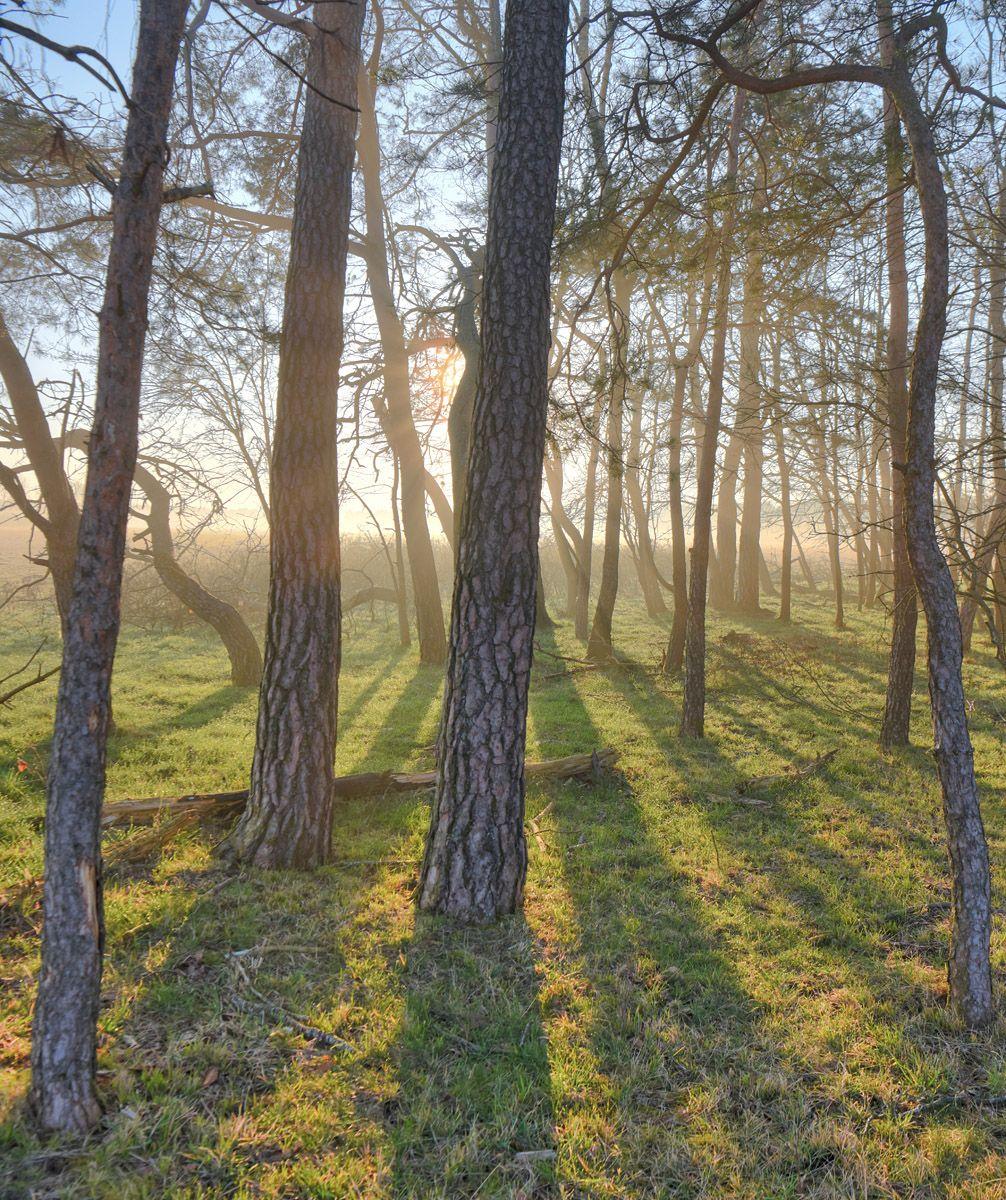 Оттенки серого лес восход солнца туман