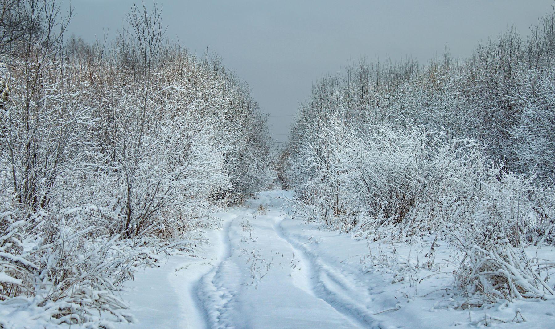 снежная фоточка россия урал природа пейзаж зима снег деревья лес дорога