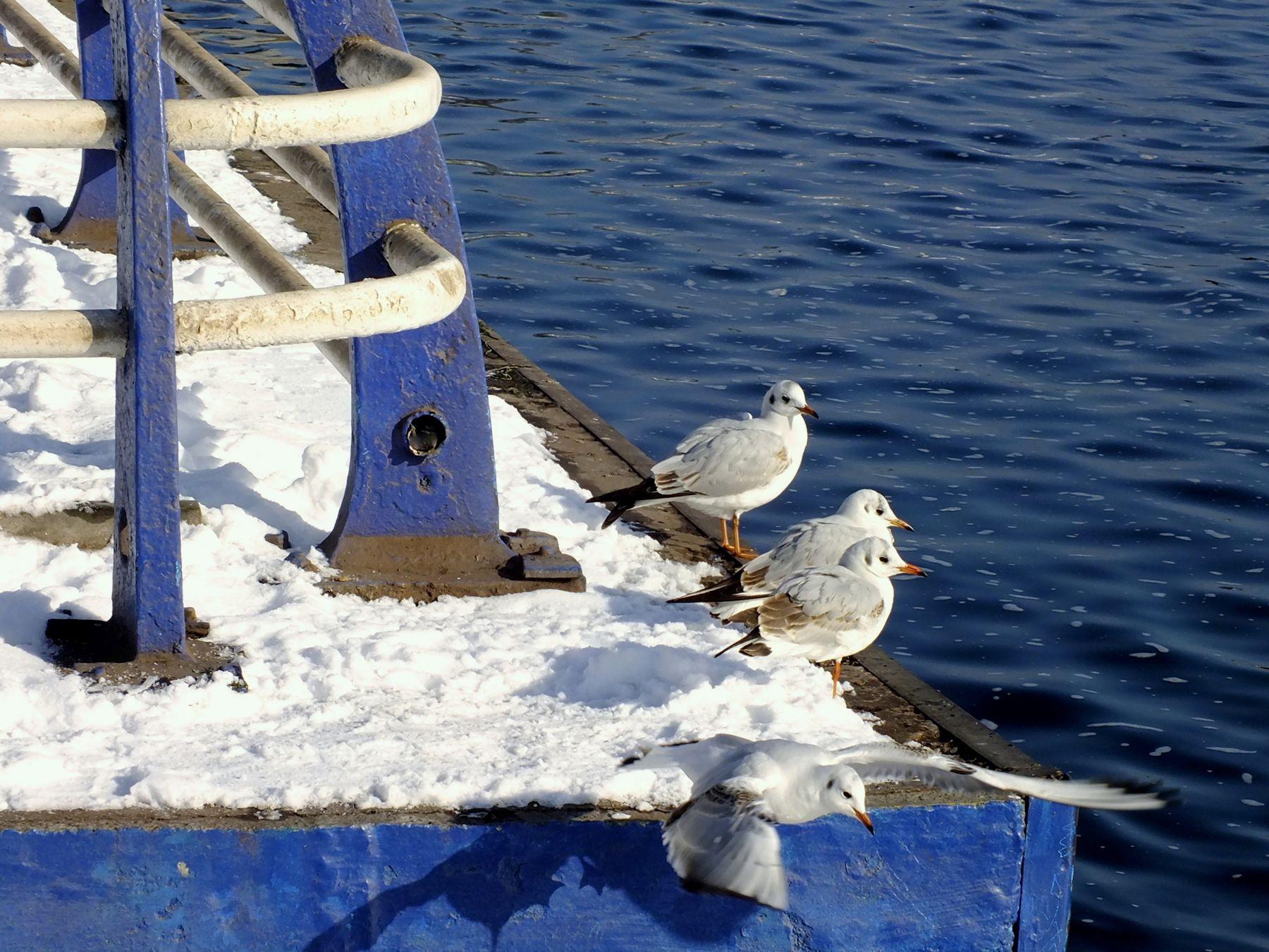 Хозяйки набережной январь днепр снег херсон набережная чайки