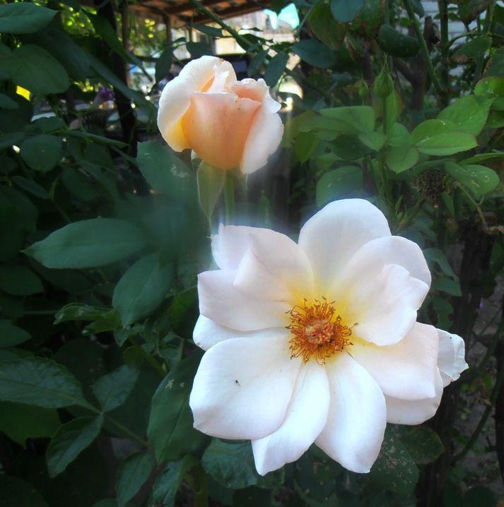 Сентябрьский ветерок дома цветы осень