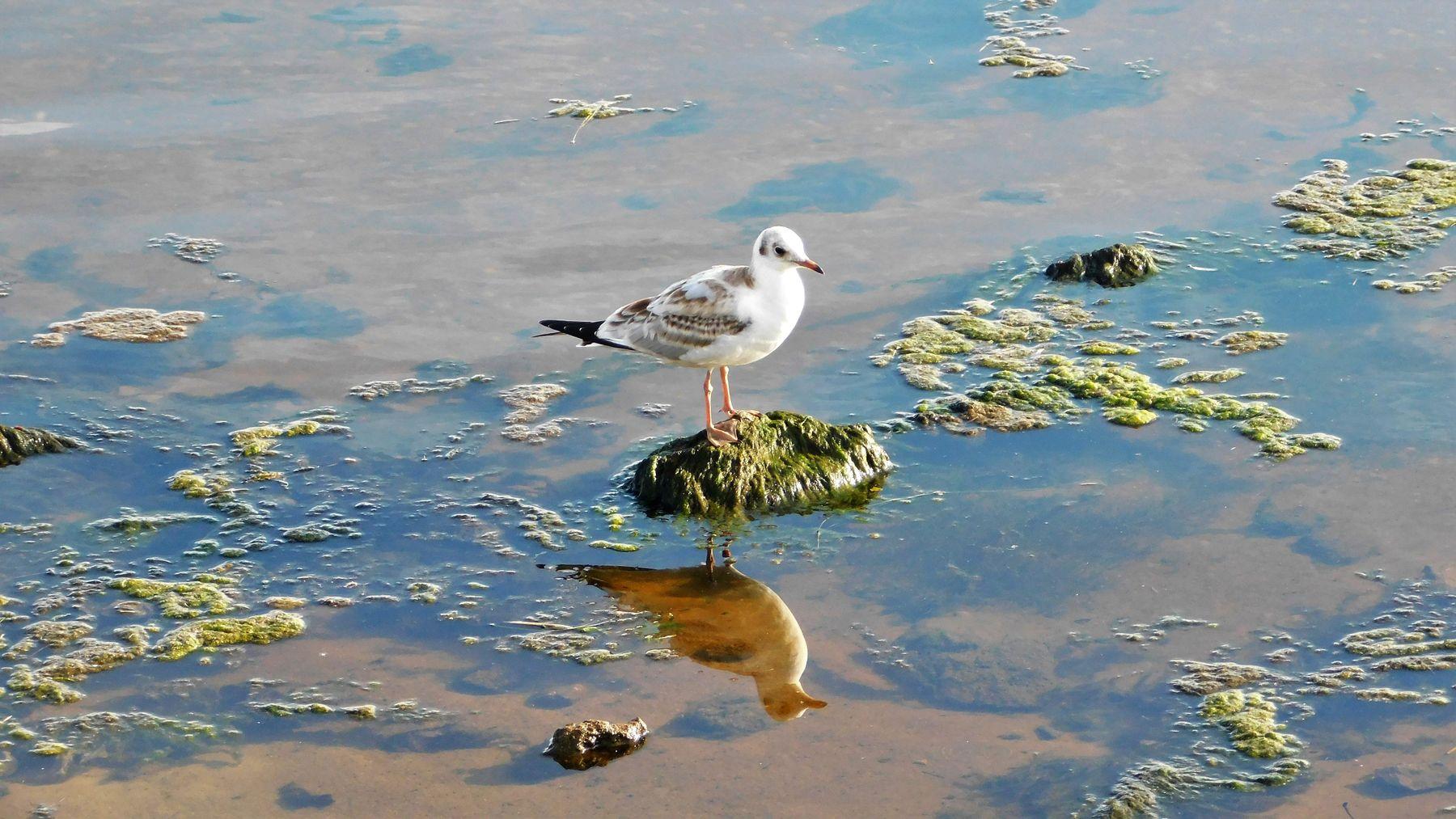 Отражение птицы чайки вода лето отражение