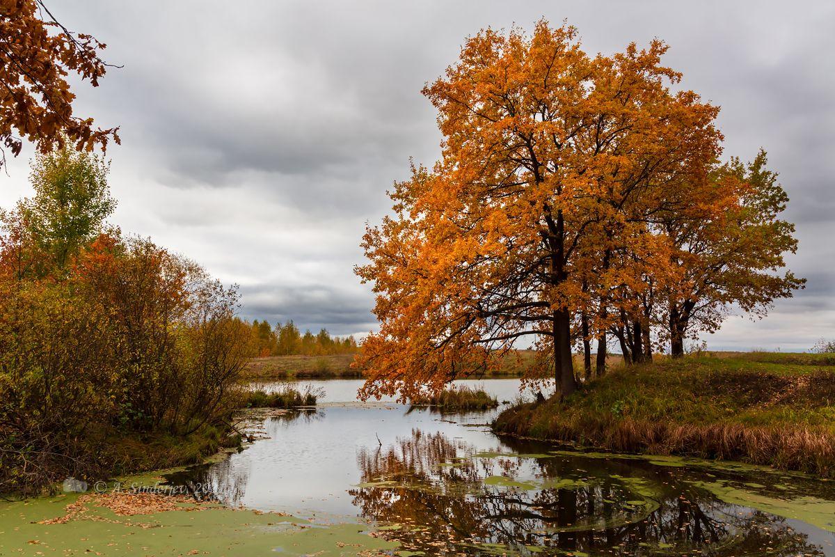 Пасмурный осенний пейзаж осень озеро деревья