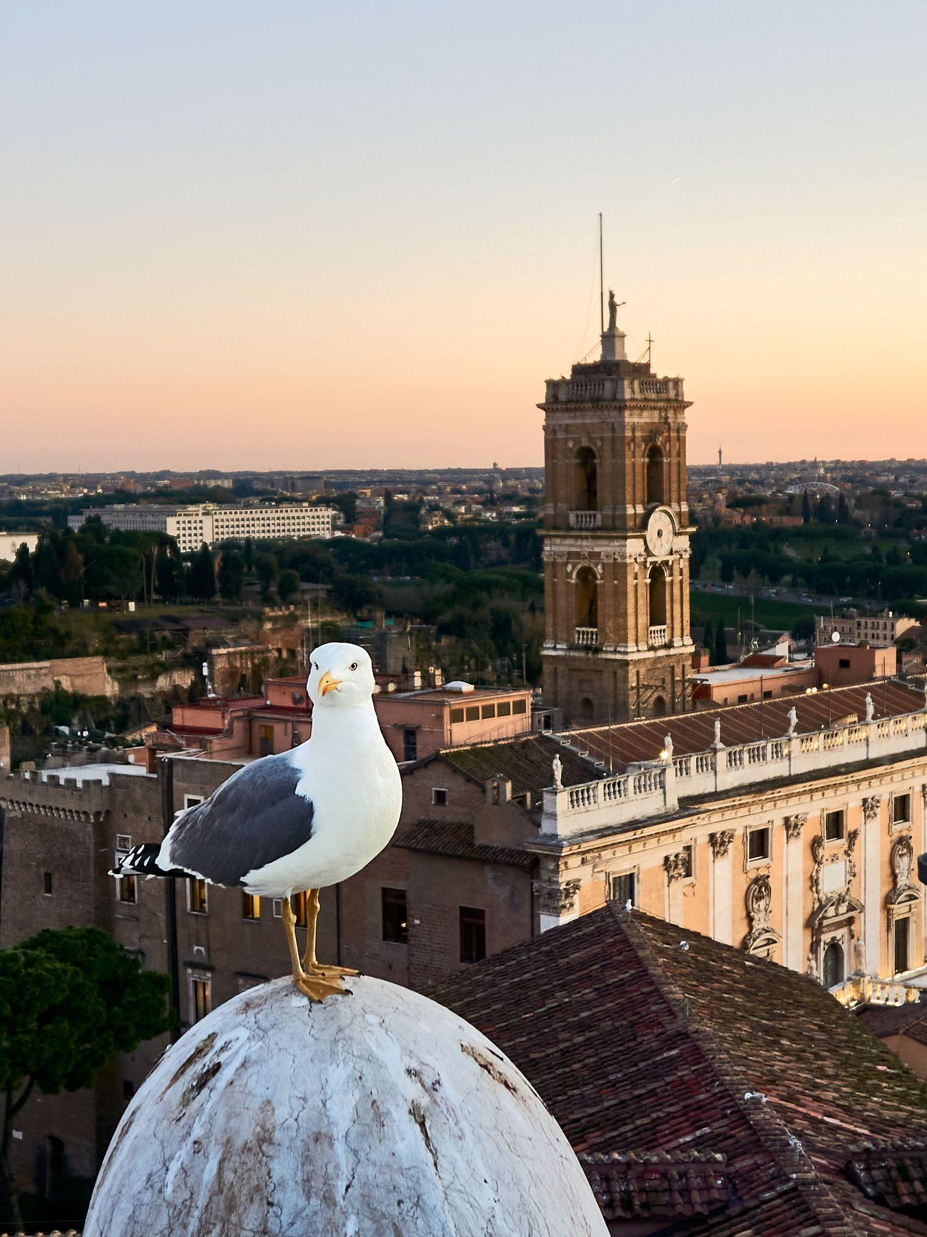Страж Чайка Италия Рим Капитолий