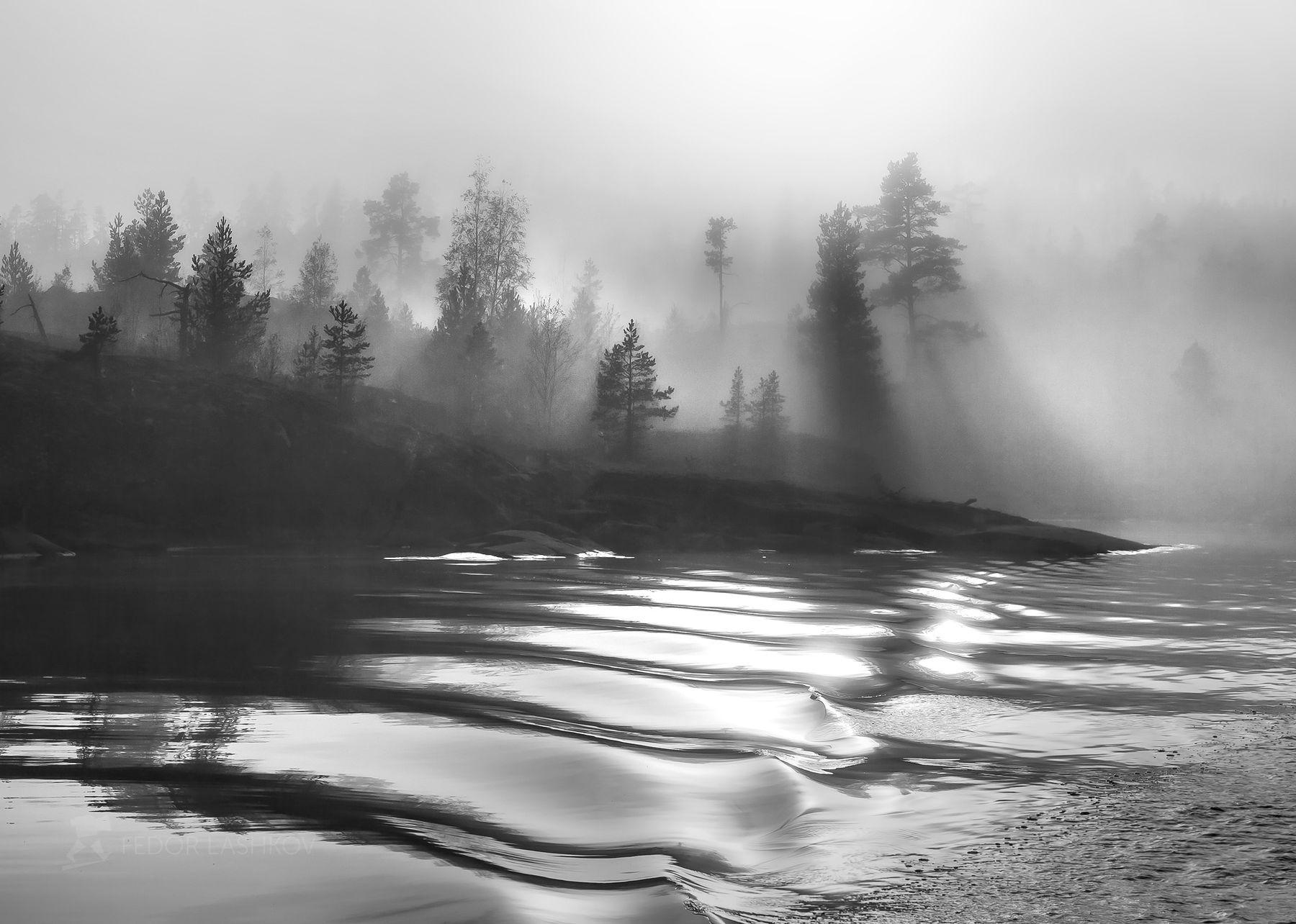 Туманный бархат Чёрно-белое пейзаж шхеры национальный парк Ладога Ладожское озеро берег сосна дерево солнце водоём туман туманный лучи волны вода